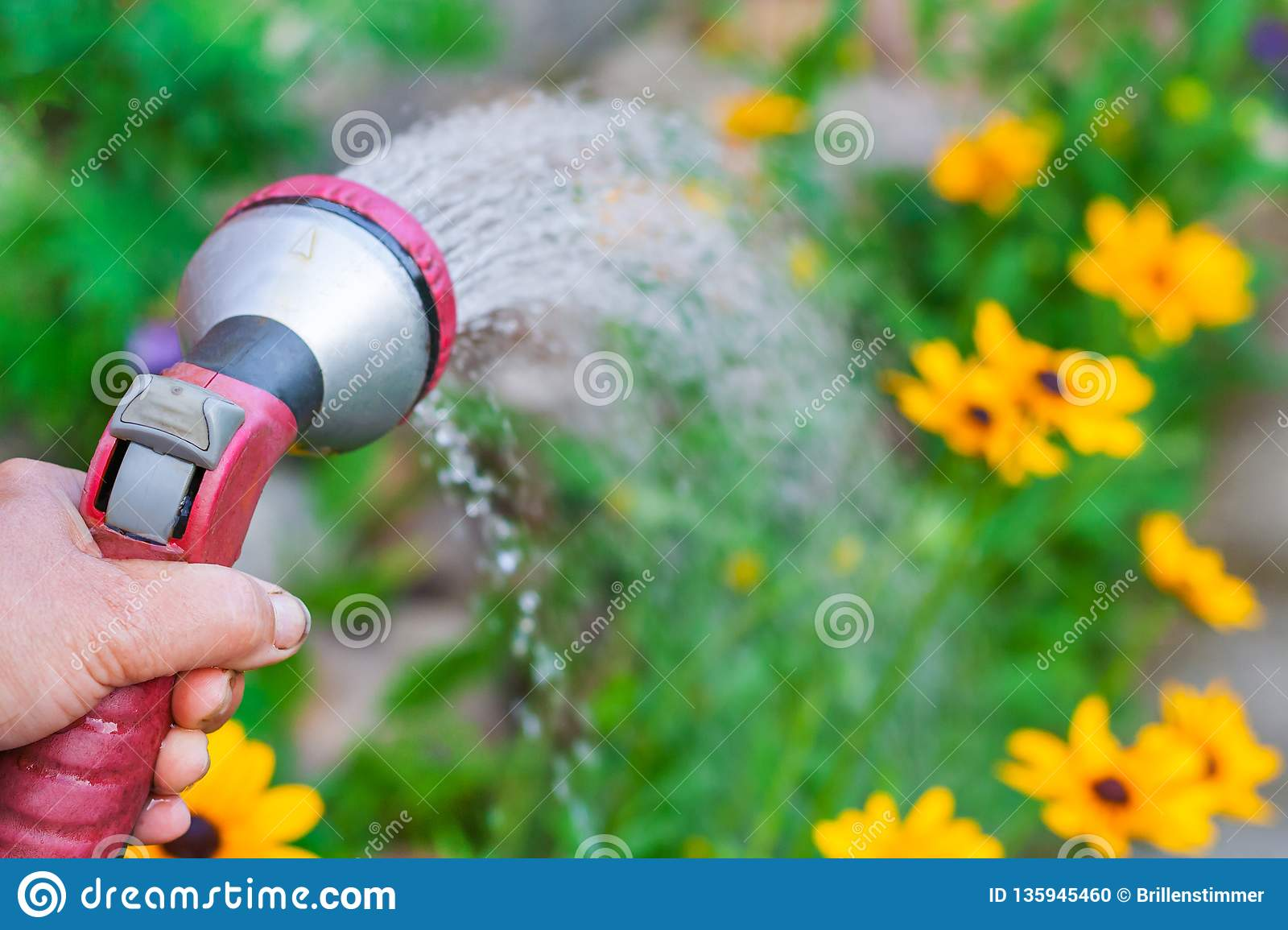 A hand with spray gun, watering a yellow flowers