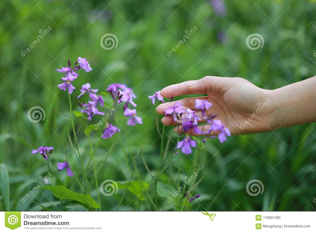 A hand touch grass and purple flower in summer spring park outdoor at a sunny day hope peace concept
