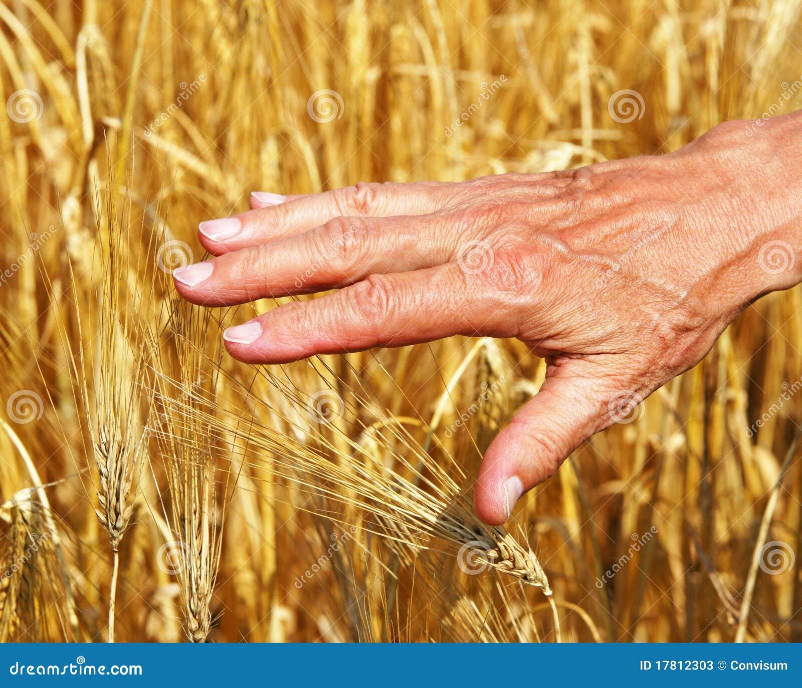 beginning farmer business plan