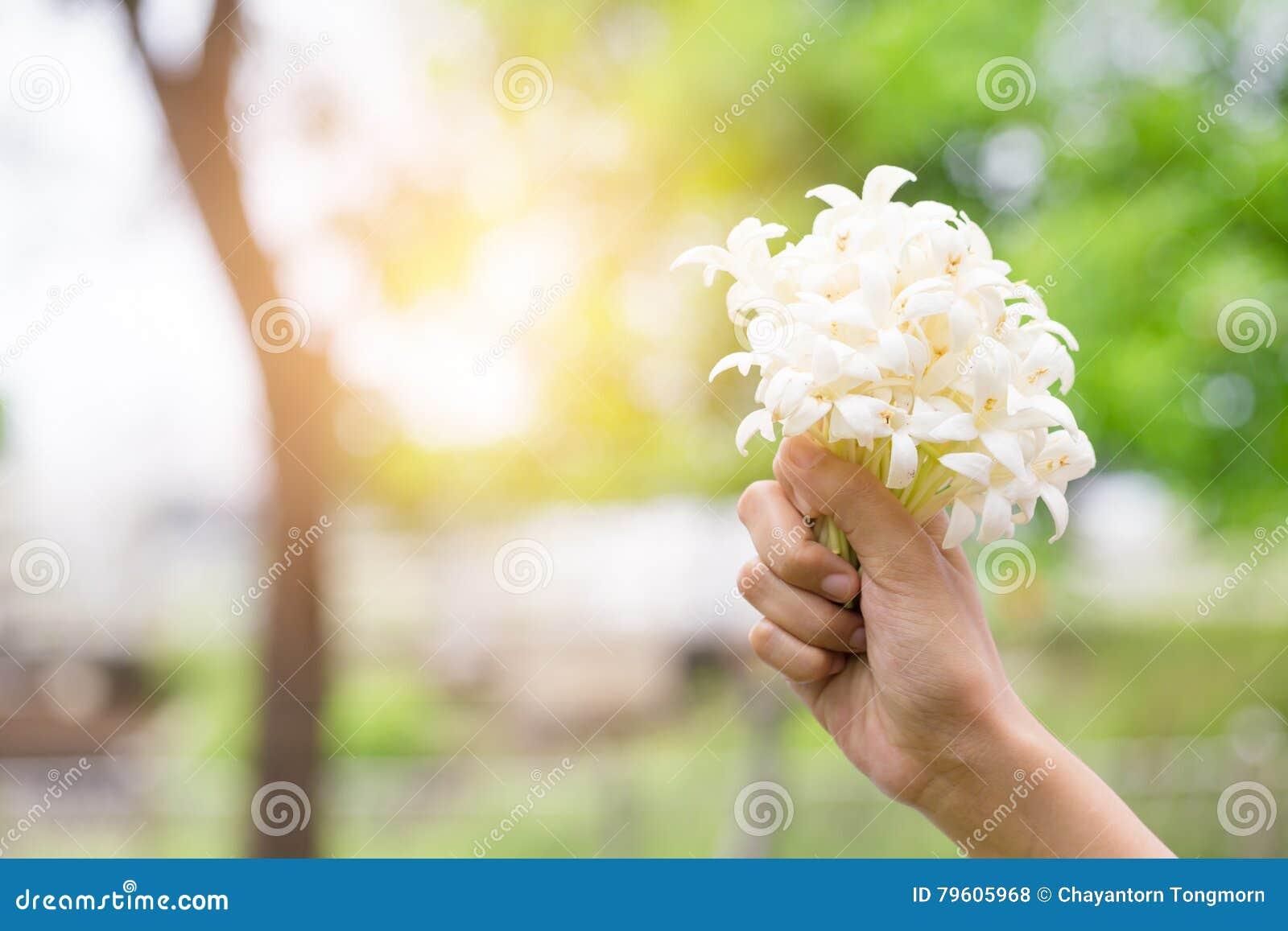 Hand van jongelui die een boeket van jasmijn met zonlicht houden