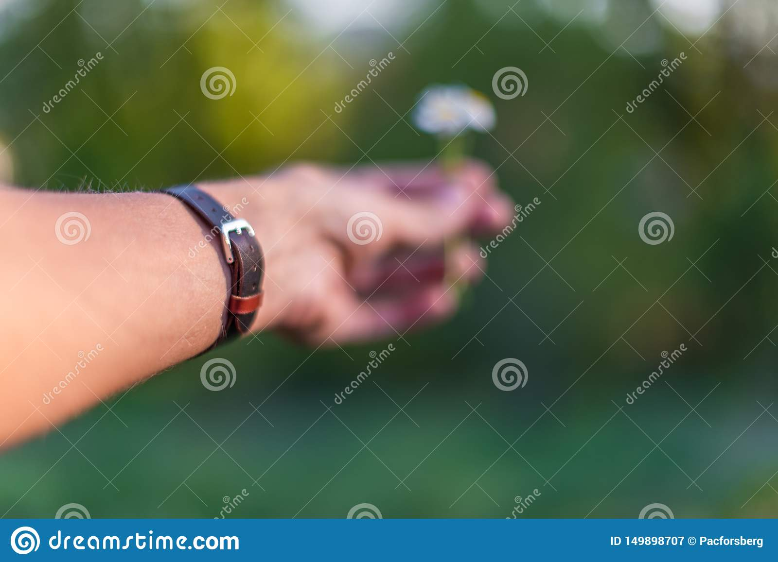 Hand wearing brown leather bracelet giving a daisy