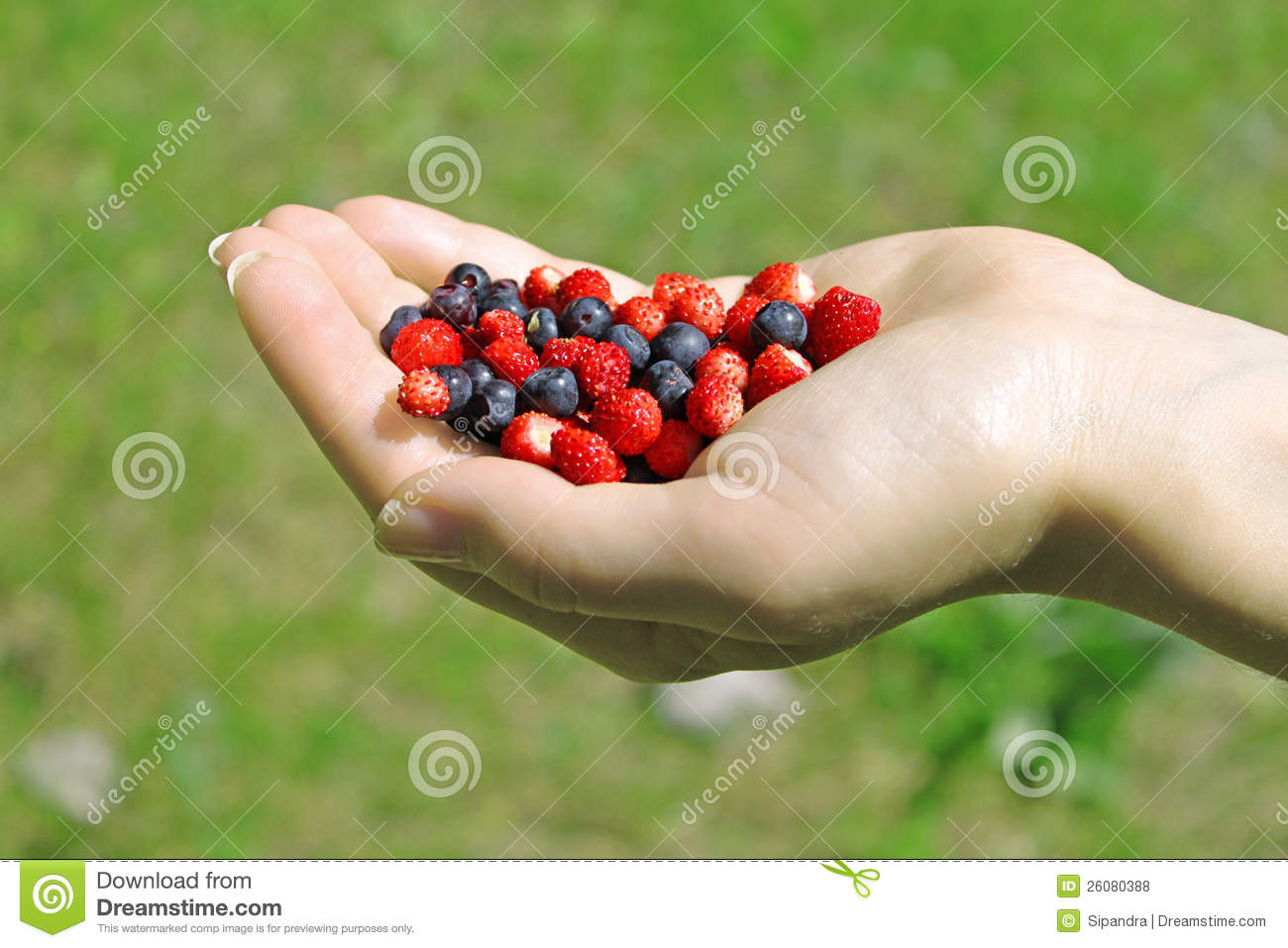 Hand with Wild Berries stock photo. Image of colourful ...