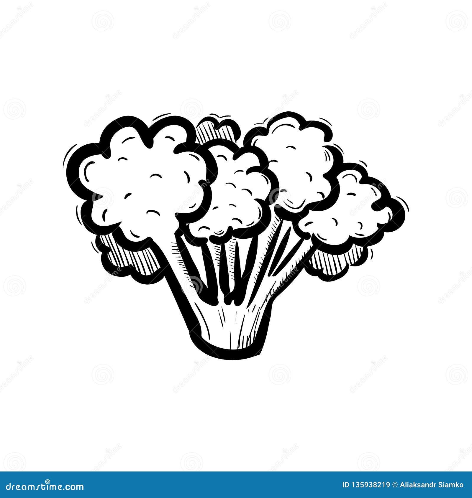 Handdrawn значок doodle брокколи Эскиз нарисованный рукой черный символ знака Элемент украшения Белая предпосылка изолировано Пло