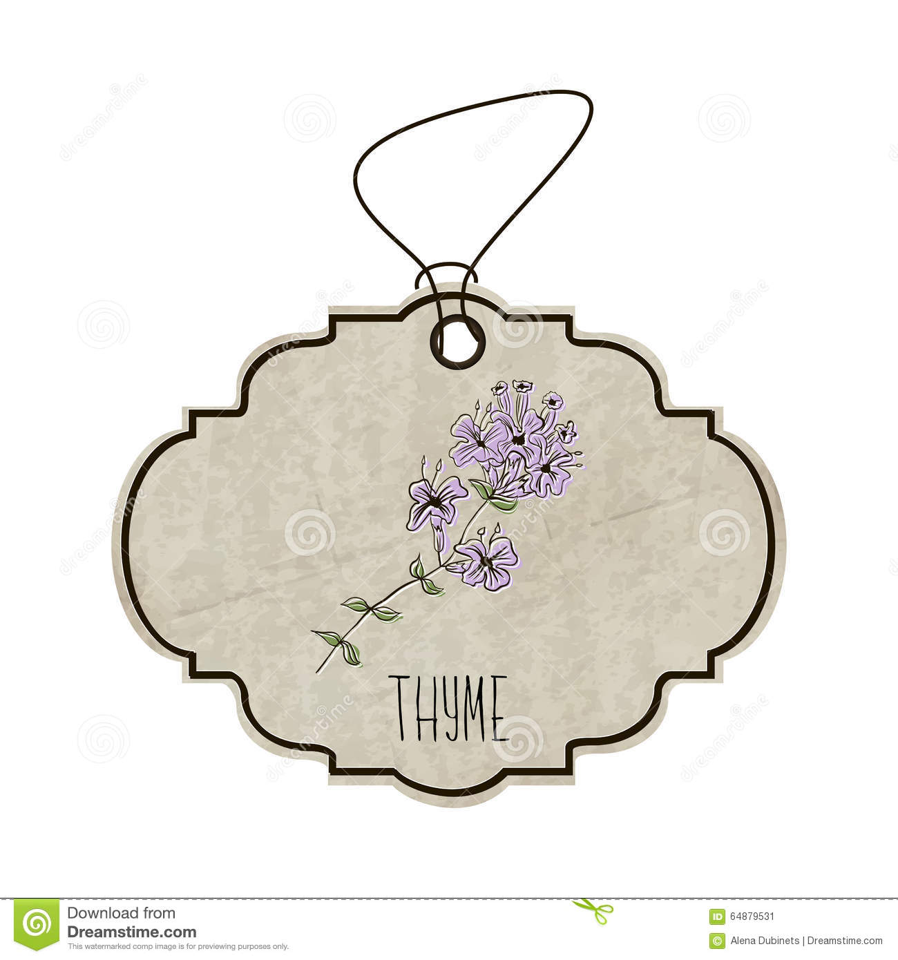 Handdrawn illustration from the collection of spices and herbs. The old label in retro style with colorful fragrant sprig of thyme