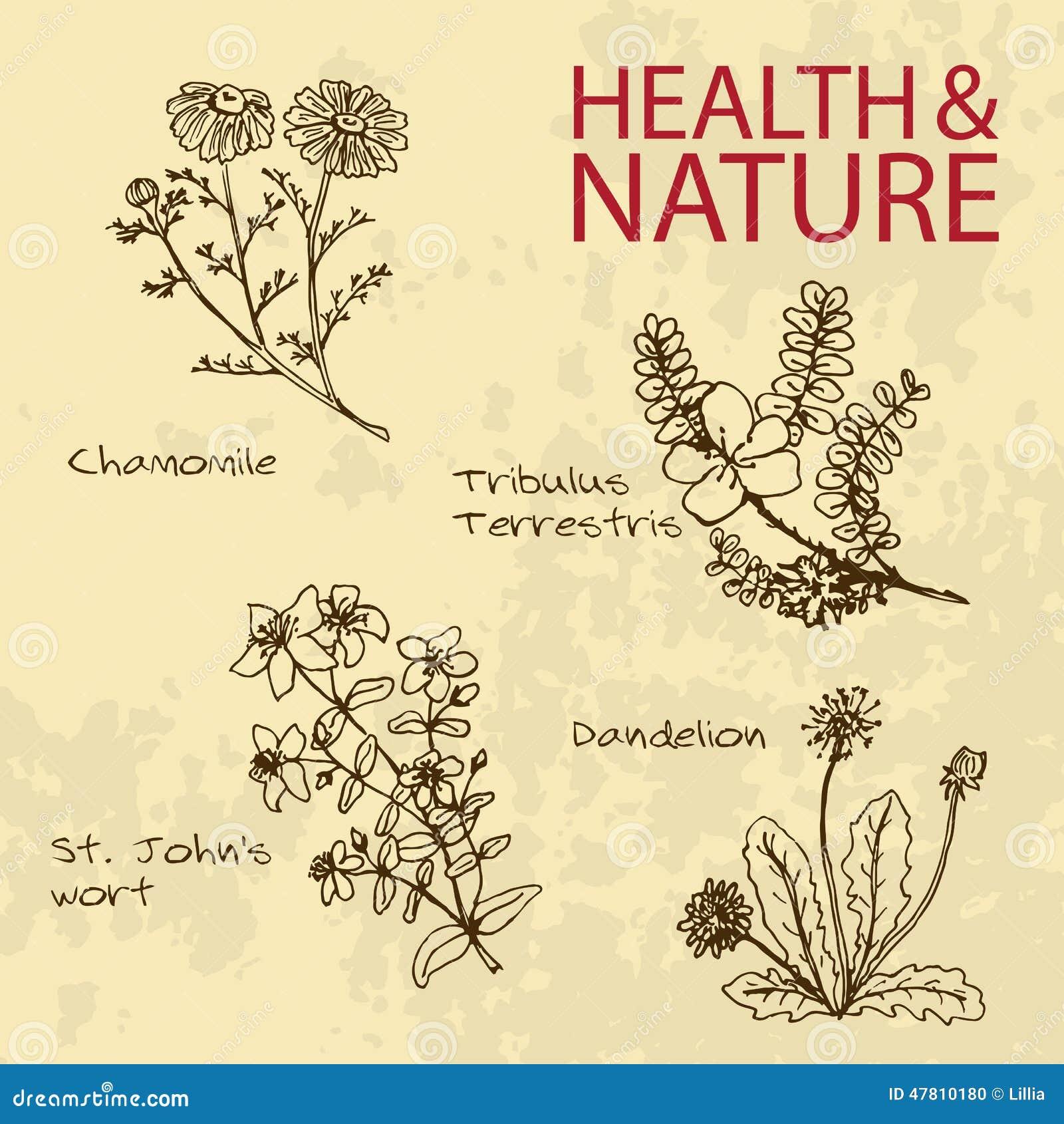 Natural Medicine St John S Wort