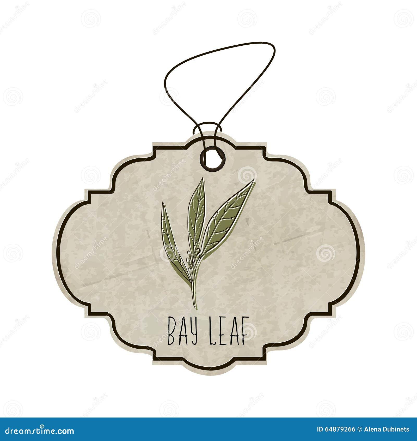 Handdrawn ilustracja od kolekci pikantność i ziele Stara etykietka w retro stylu z kolorowym fragrant bobkiem opuszcza