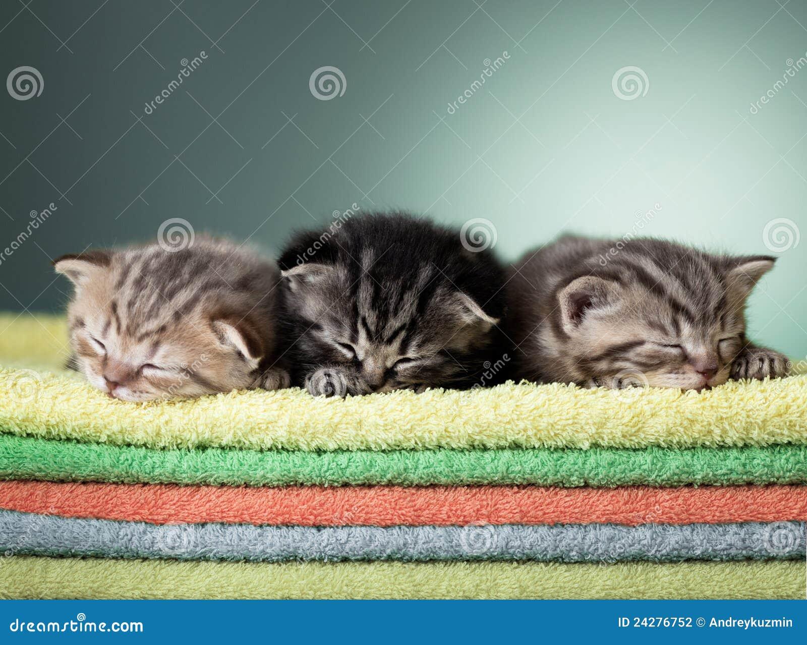 Handdukar för bunt tre för kattungeskott sova