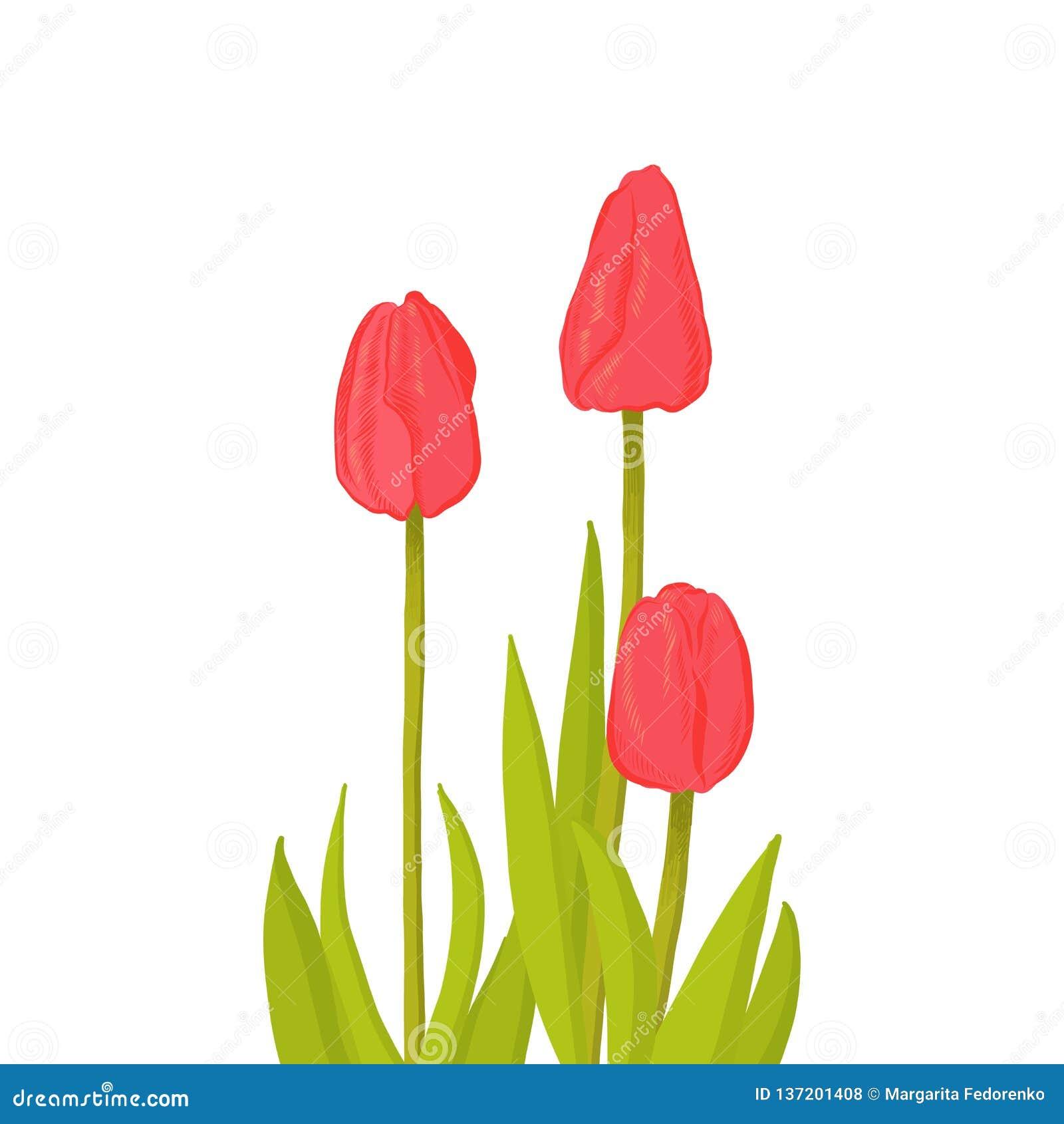 Handen drog gruppen av blomman för tulpan för sikten för sida tre den röda, skissar stilvektorillustrationen som isoleras på vit