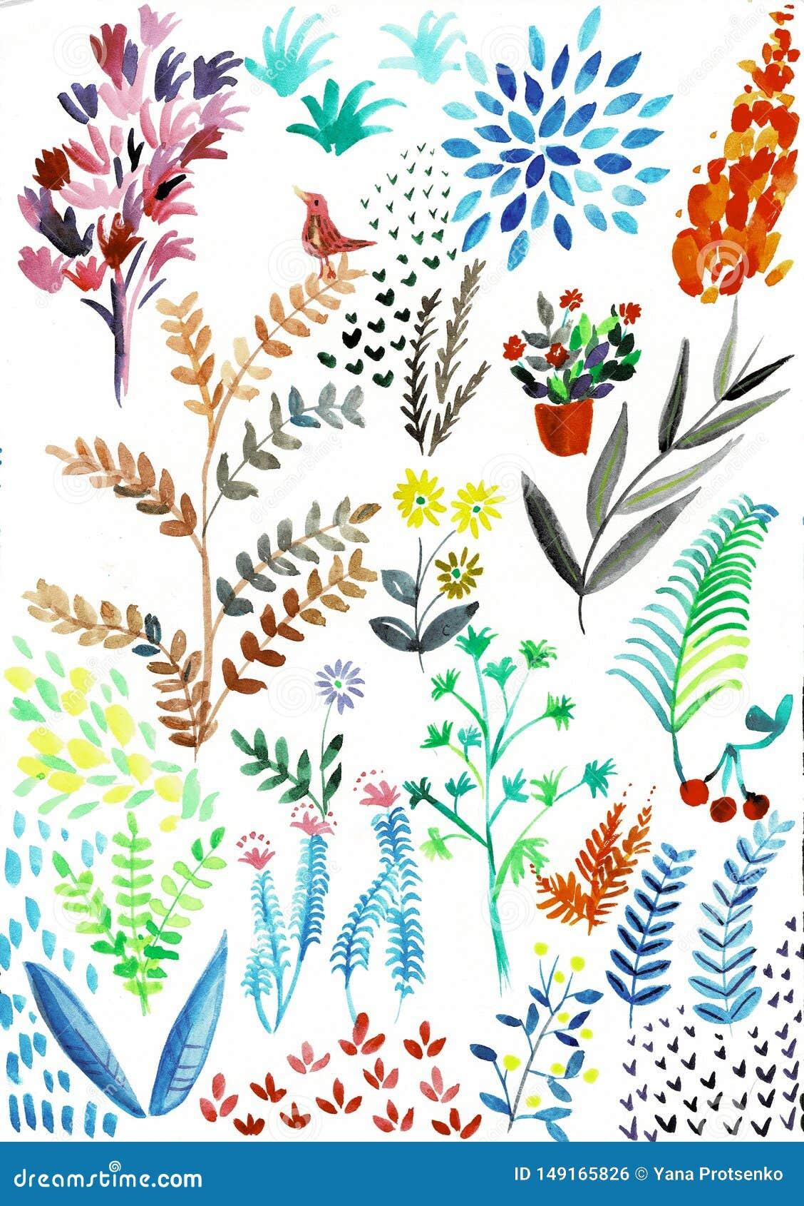 Handen f?r vattenf?rgheliconiasamlingen m?lade exotiska sidor och blommor som isolerades p? vit bakgrund