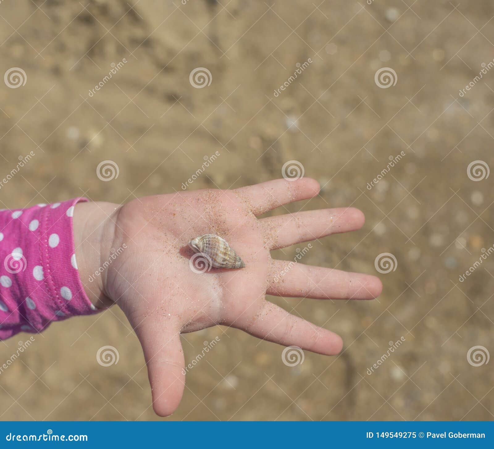 Handen med skalet p? sandbakgrund barns hand som rymmer ett skal p?, g?mma i handflatan