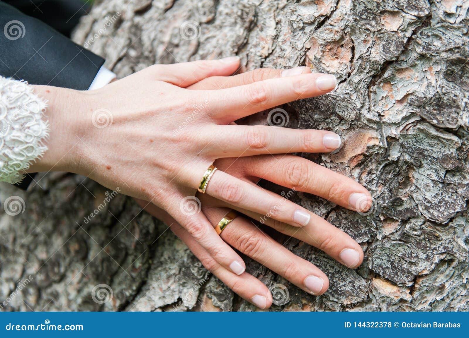 Handen van de bruid en de bruidegom op boomboomstam