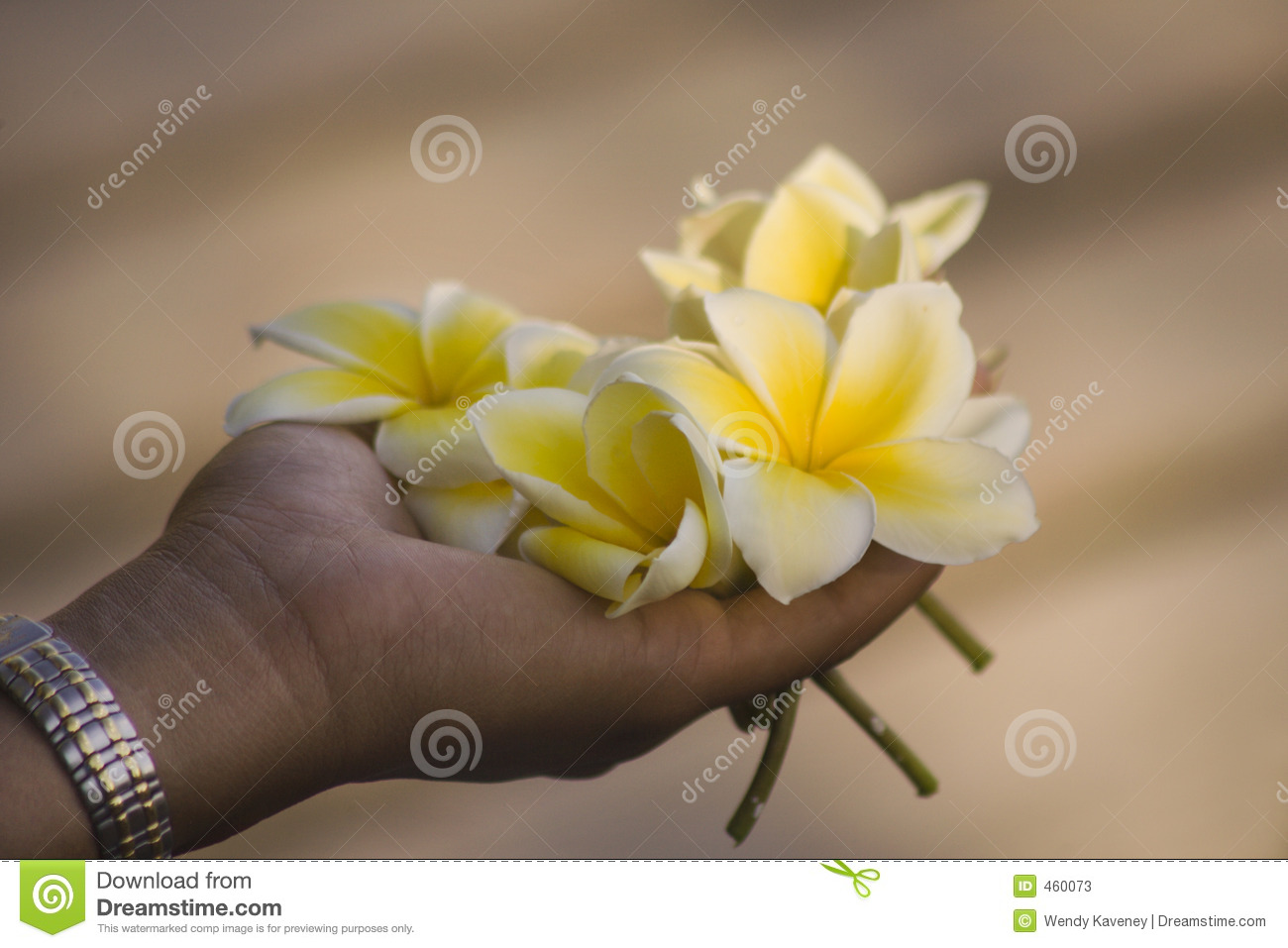 Download A Handful of Flowers stock image. Image of nature, white - 460073
