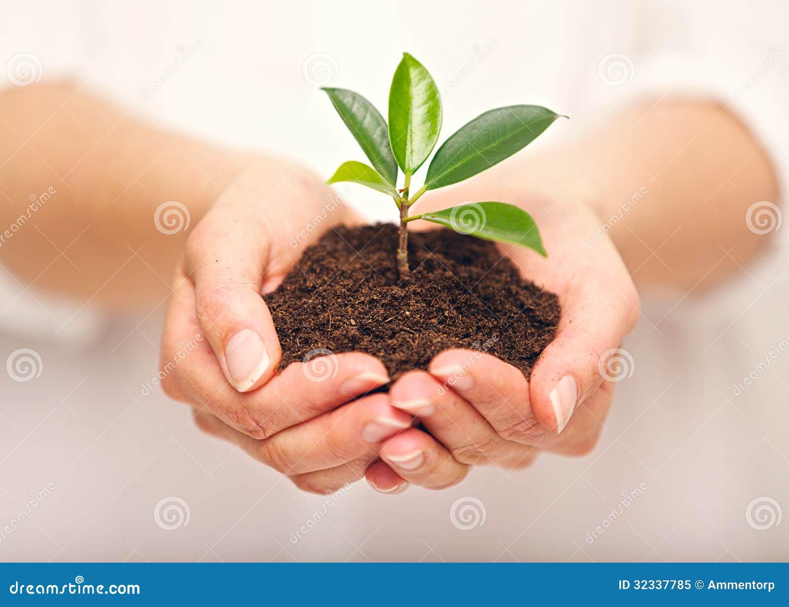 Handfulljord med att växa för ung växt
