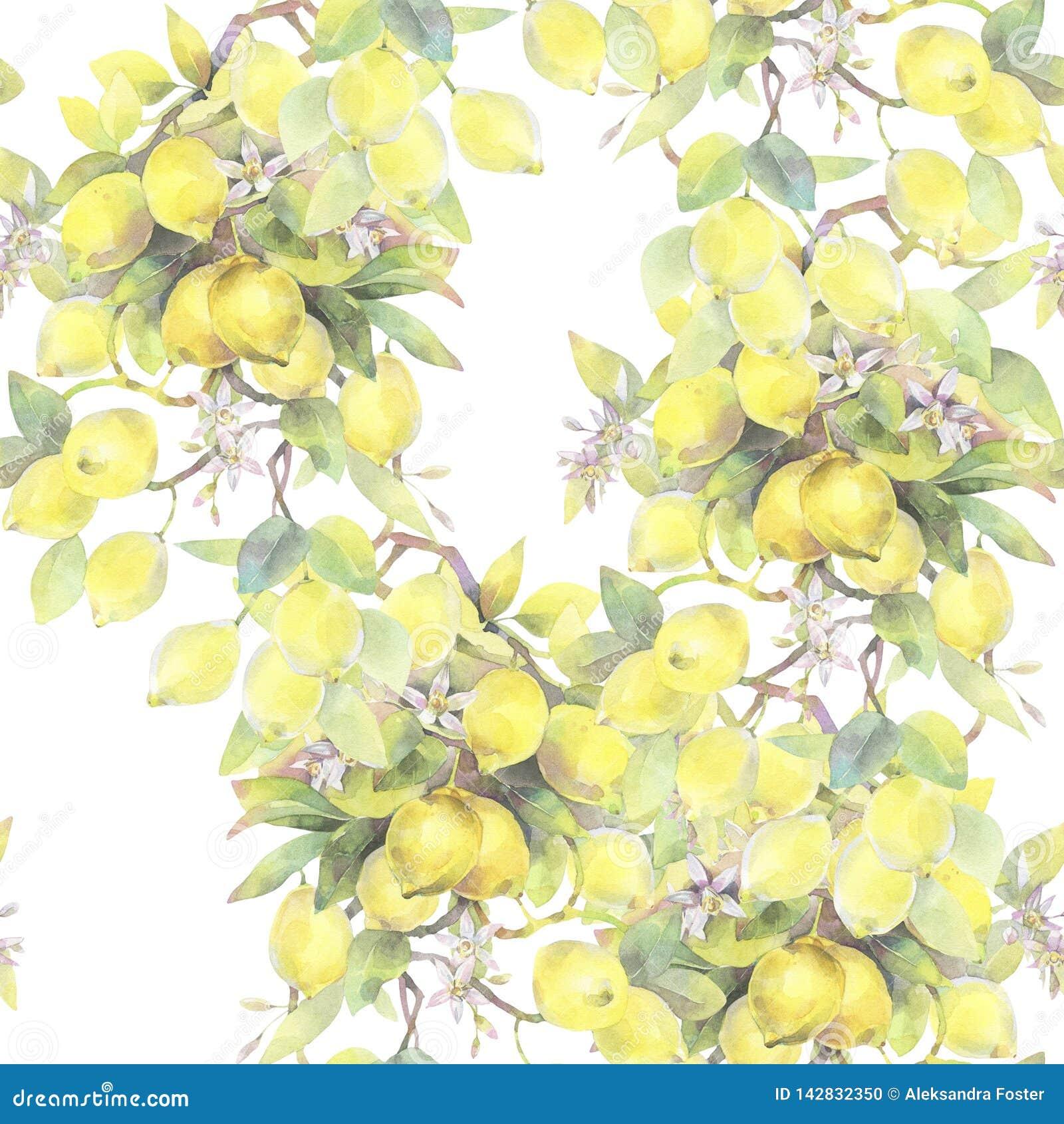 Handgemalte Aquarellillustration nahtloses Muster mit Zitronenbaumniederlassungselementen