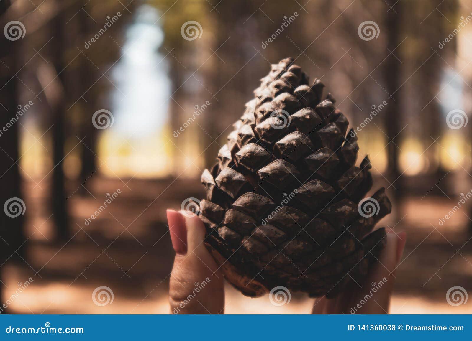 Handinnehavet sörjer kotten i skogen