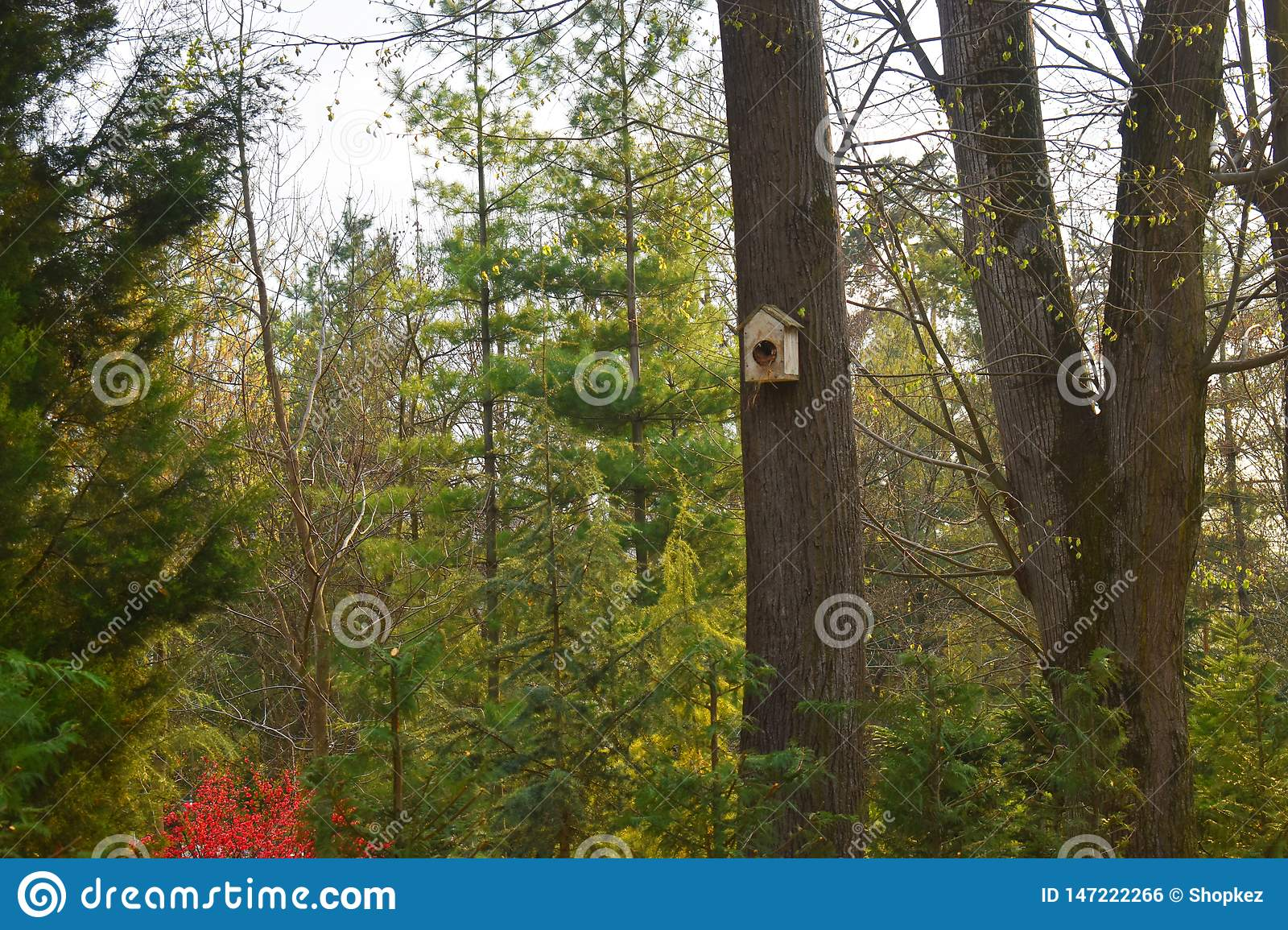 Handmade birdhouse on a tree in forest Park , hand wood shelter for birds to spend the winter