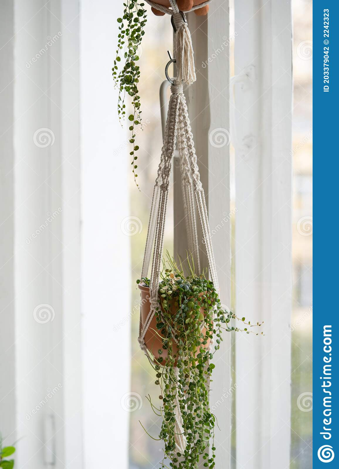 Handmade Cotton Macrame Plant Hanger Hanging From The Window In Living Room Love For Indoor Plants Hobby Stock Photo Image Of Houseplant Greenery 203379042