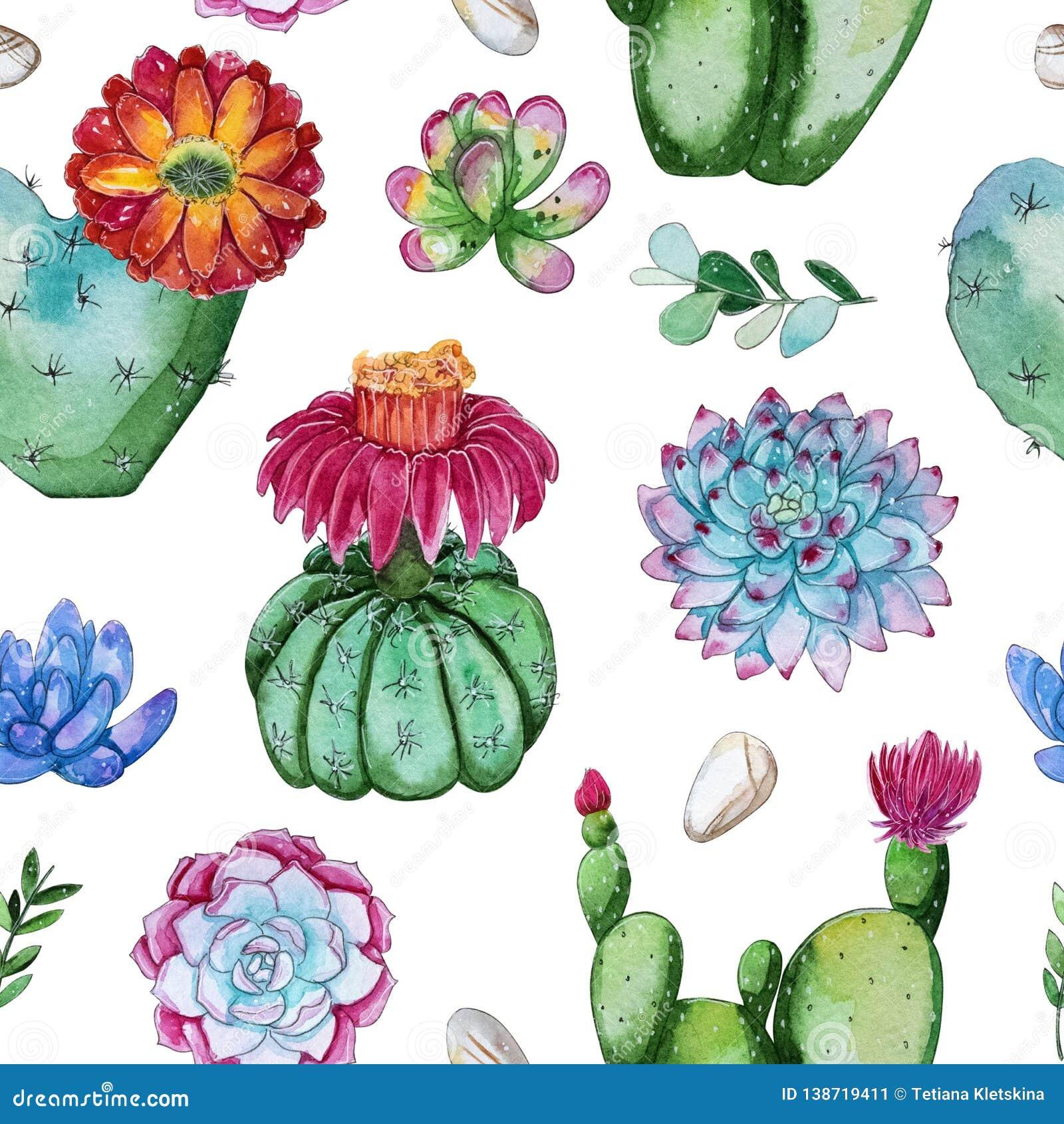 Handpainted sömlös modell för vattenfärg av att blomma kaktusväxten