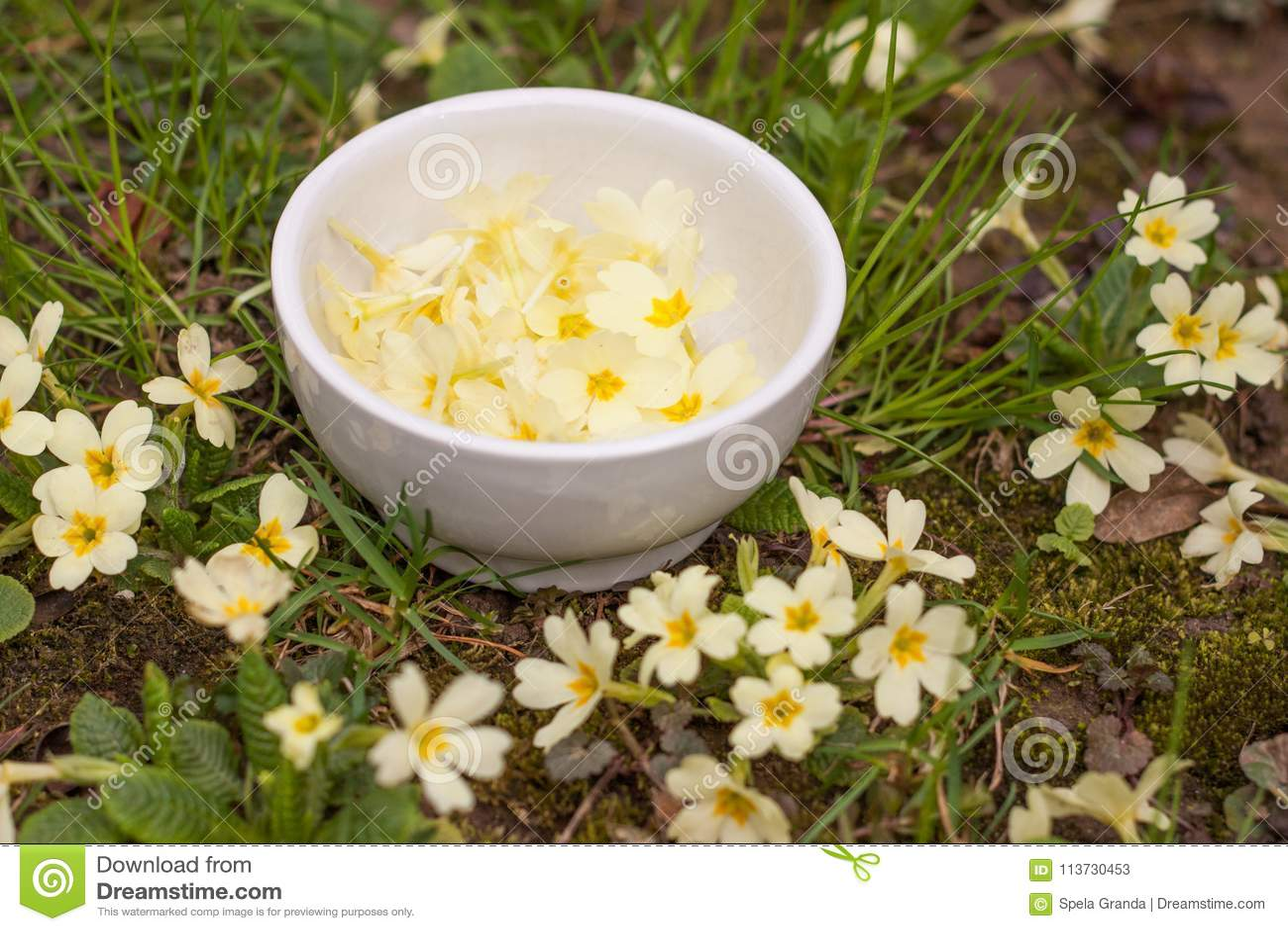 Handpicked Primrose Flowers Used As Salad Decoration Stock Image