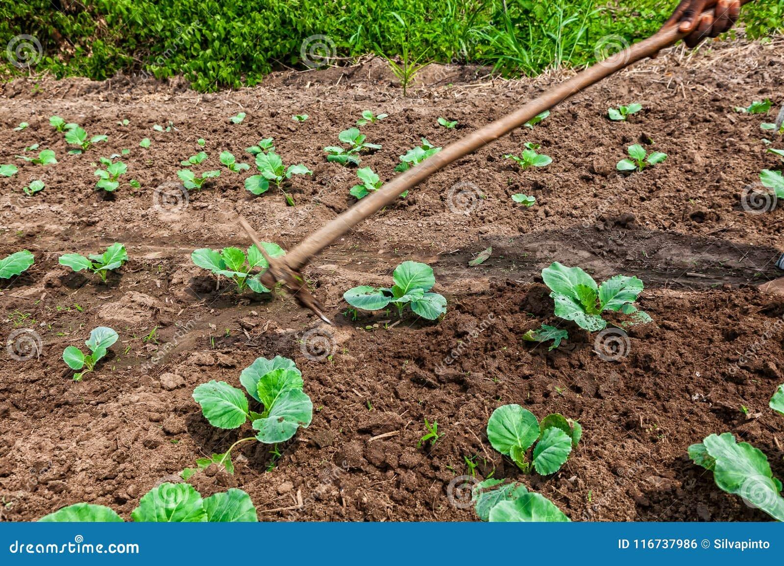 farmer farming pictures