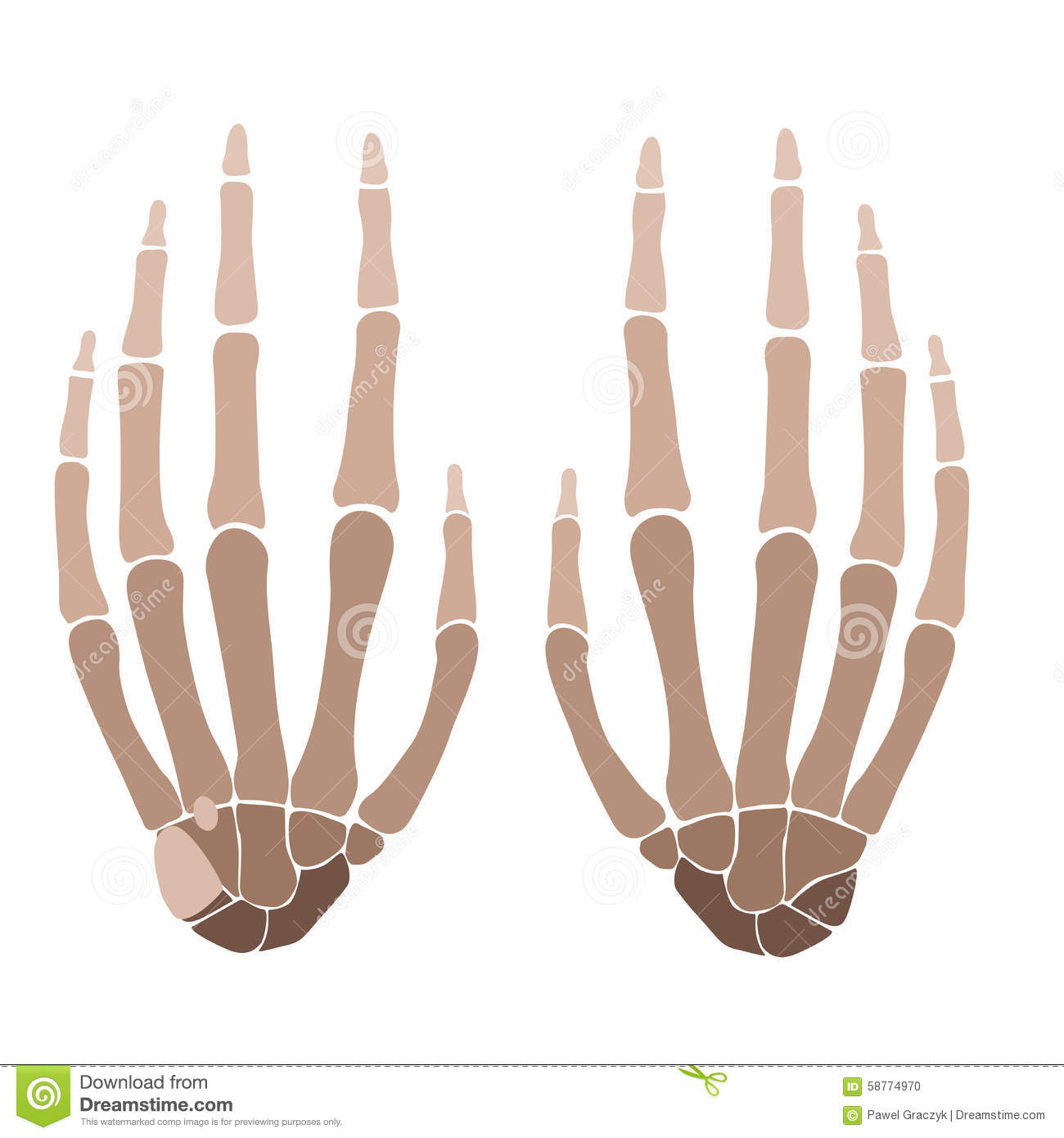 Hands Anatomy Stock Vector Illustration Of Pain Medical 58774970
