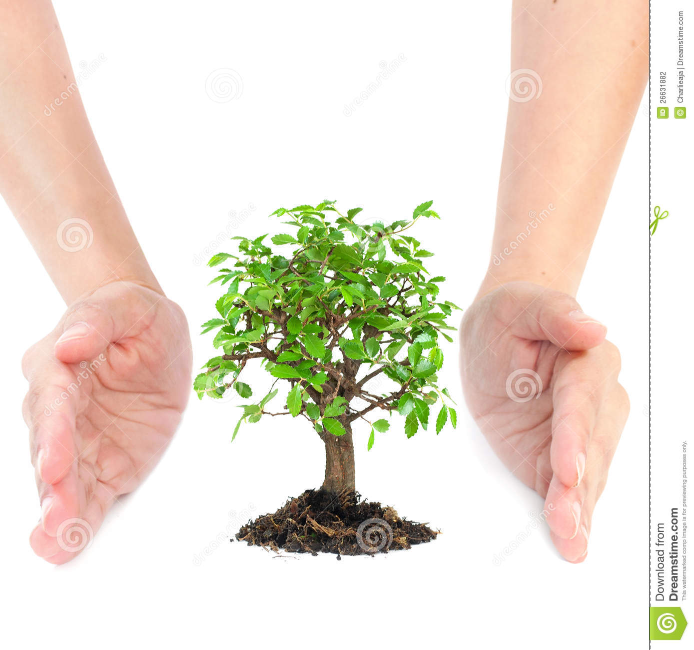 Hands Around Small Tree Stock Photography Image 26631882
