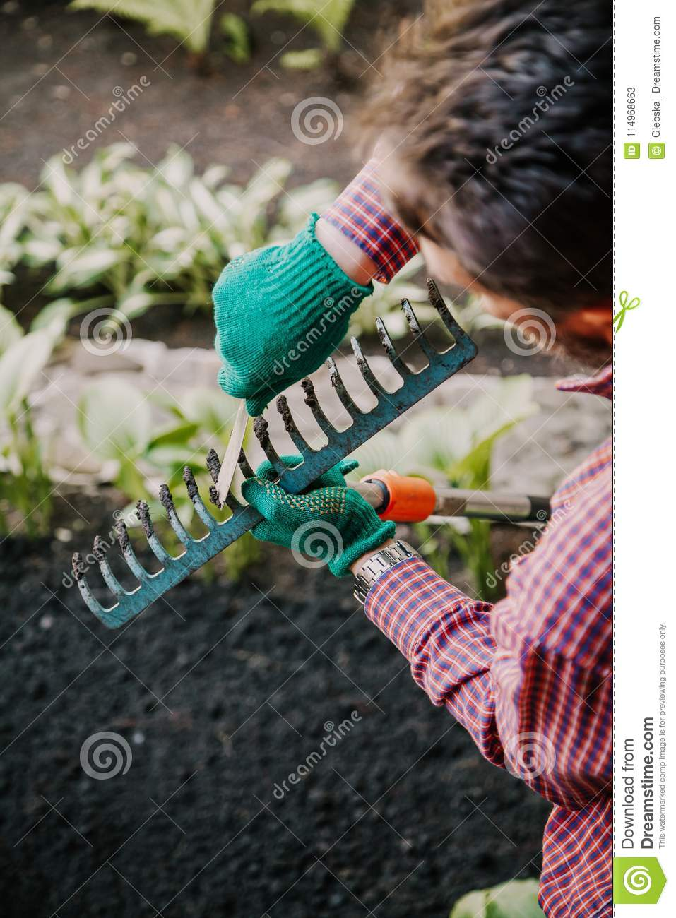 Download Hands Clear Rake From Ground By Weight With Special Scraper Stock  Image   Image Of