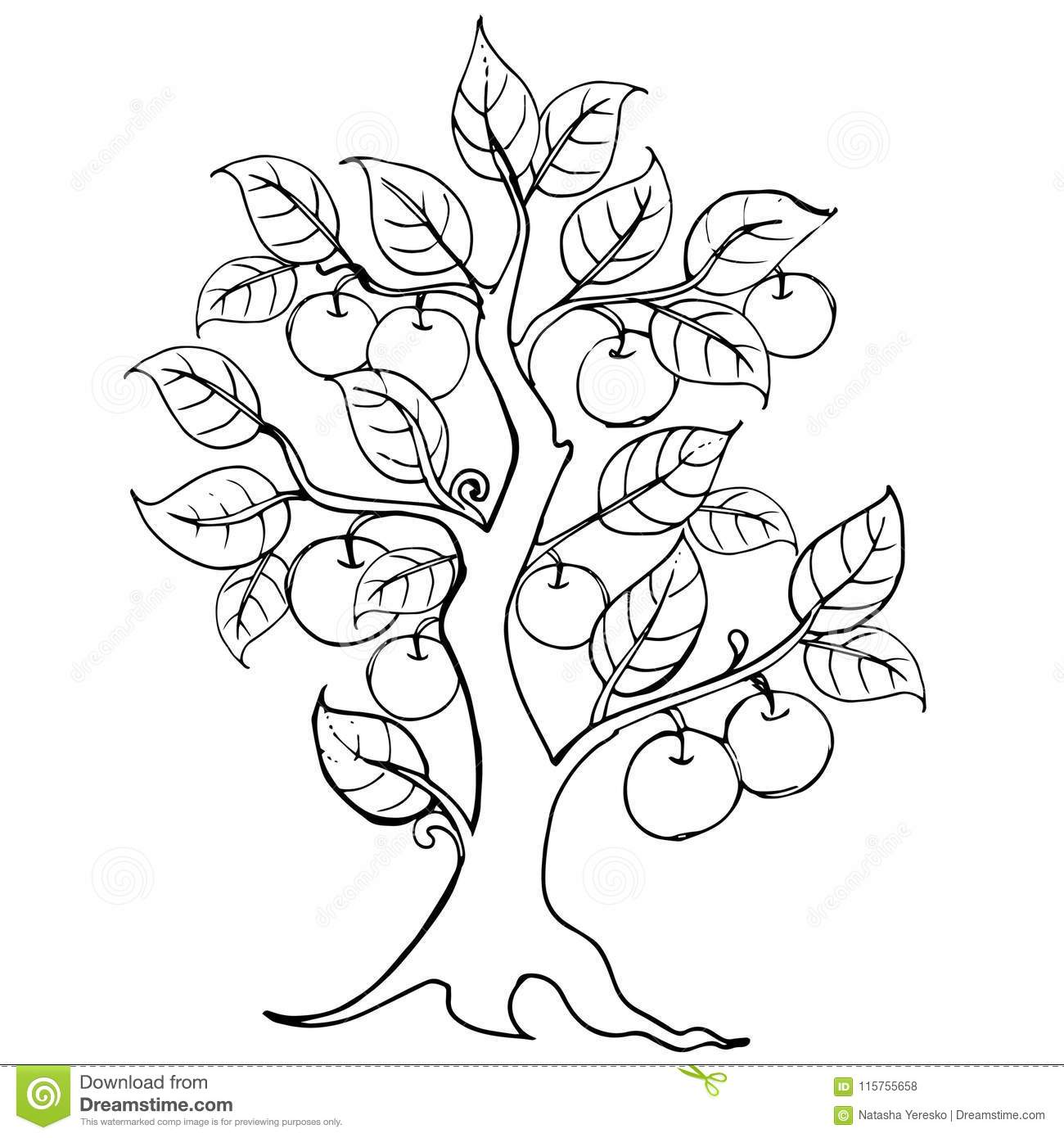 drawing apple tree vector artwork illustration for