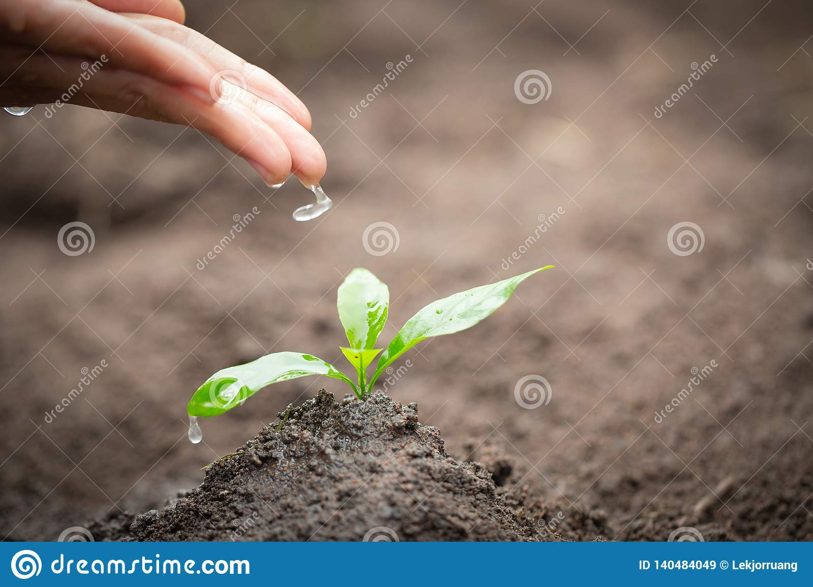 The hands are dripping water to the small seedlings, plant a tree, reduce global warming, World Environment Day