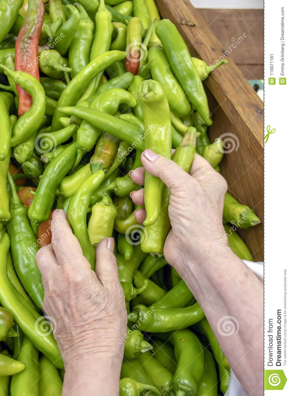 Hands of an elderly woman choosing a pepper