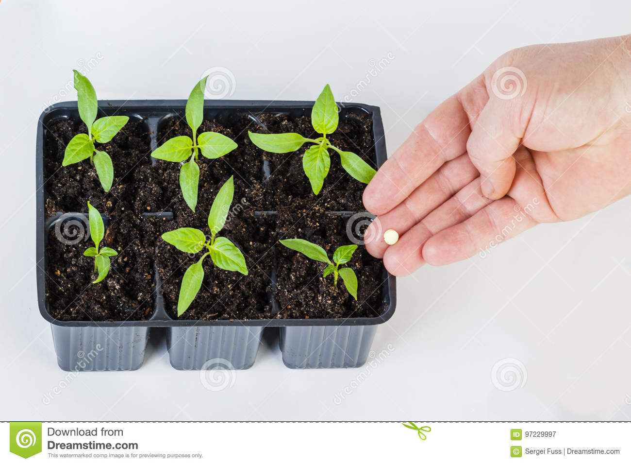 The hands of a farmer giving fertilizer to young green plants.
