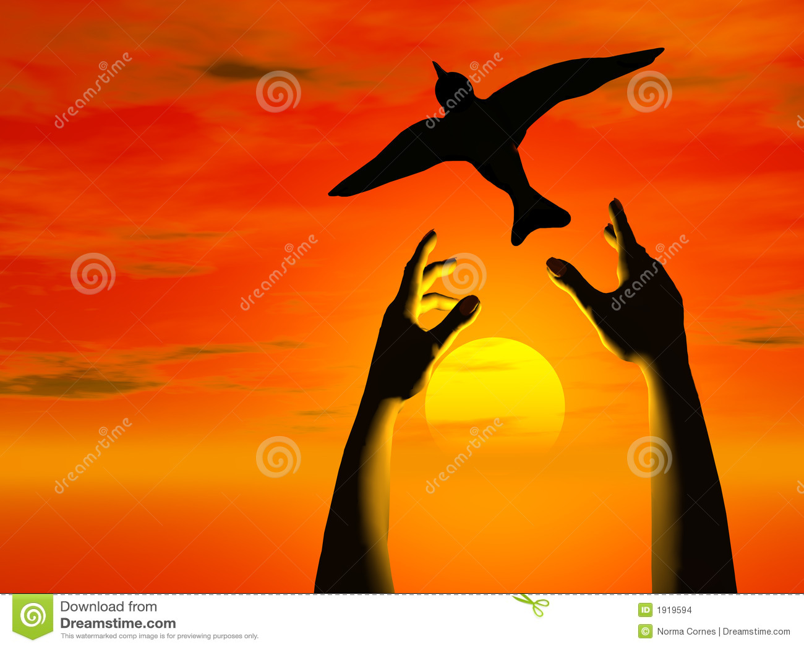 hands free bird into sunset stock illustration illustration of