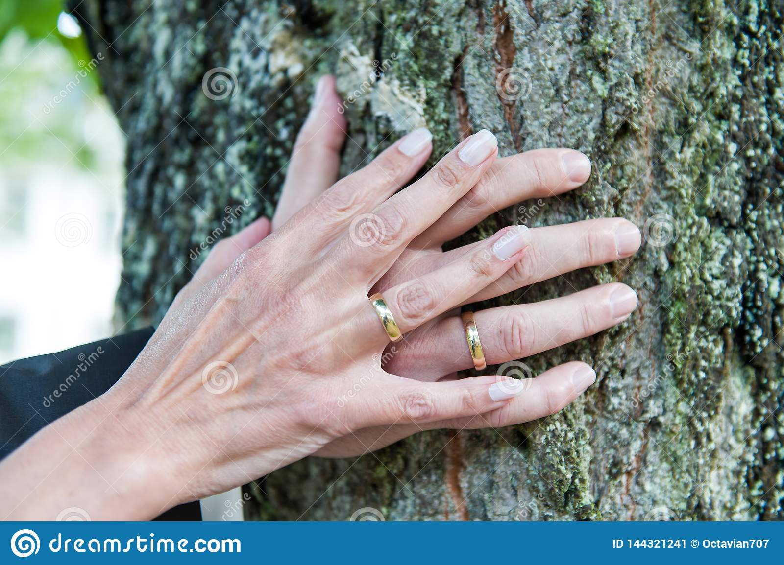 Hands of a fresh married couple with wedding rings on tree trunk
