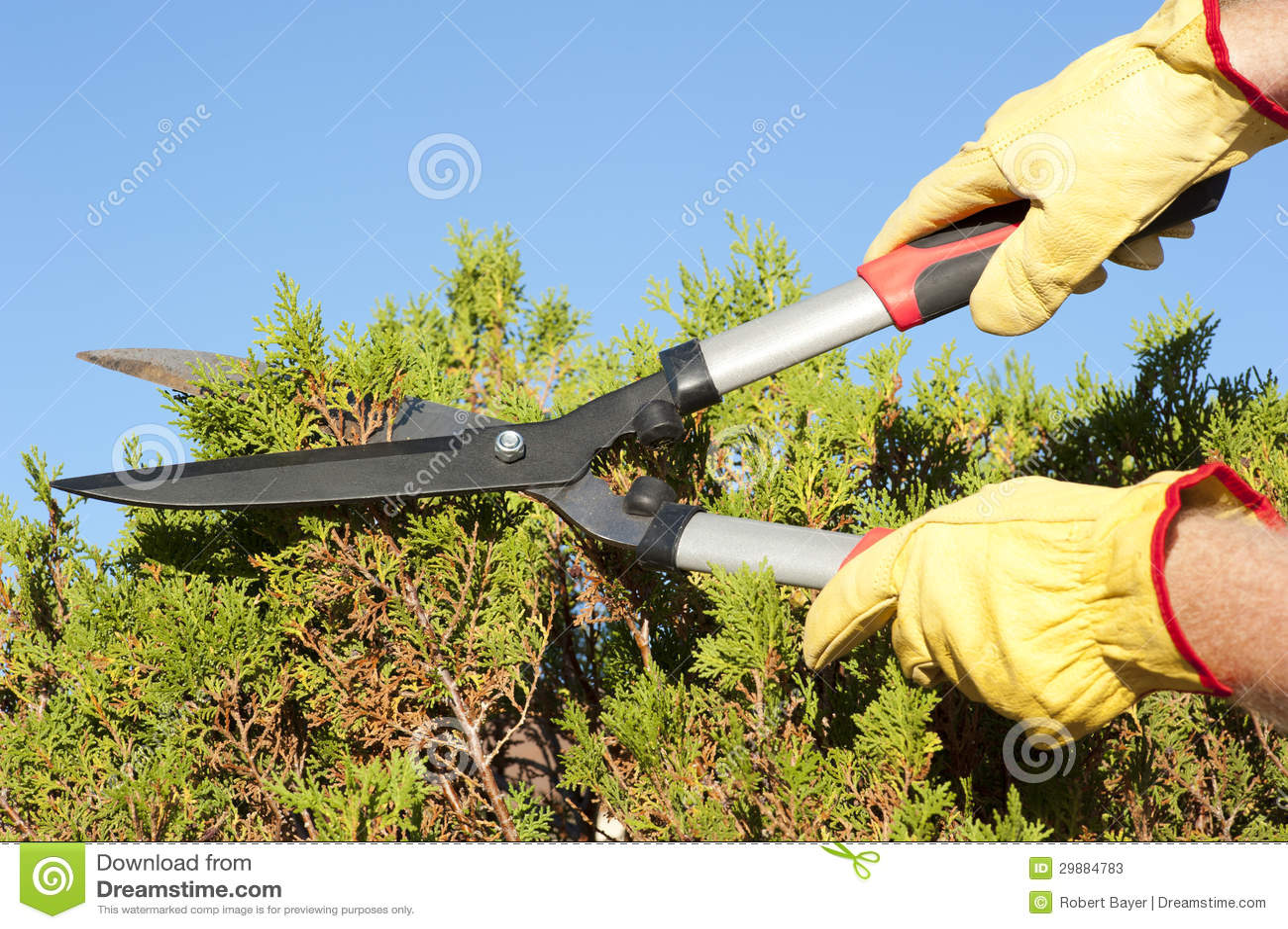 Garden work pruning hedge sky background stock photos for Garden maintenance work
