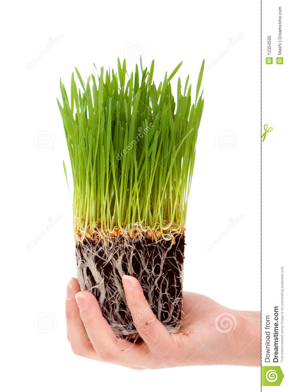Wheatgrass business plan