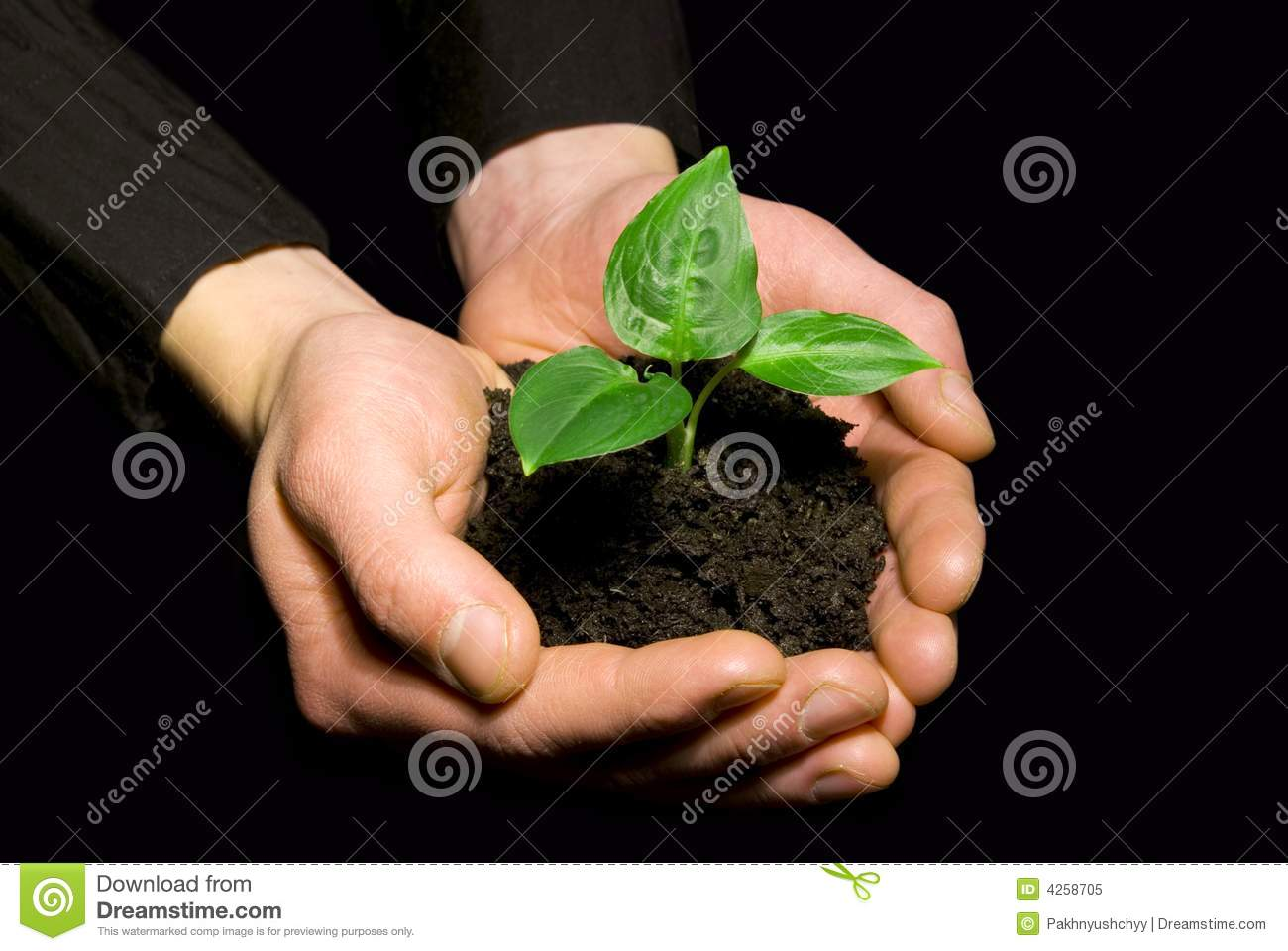 Hands holding sapling royalty free stock photo image for 3d nail salon cypress tx