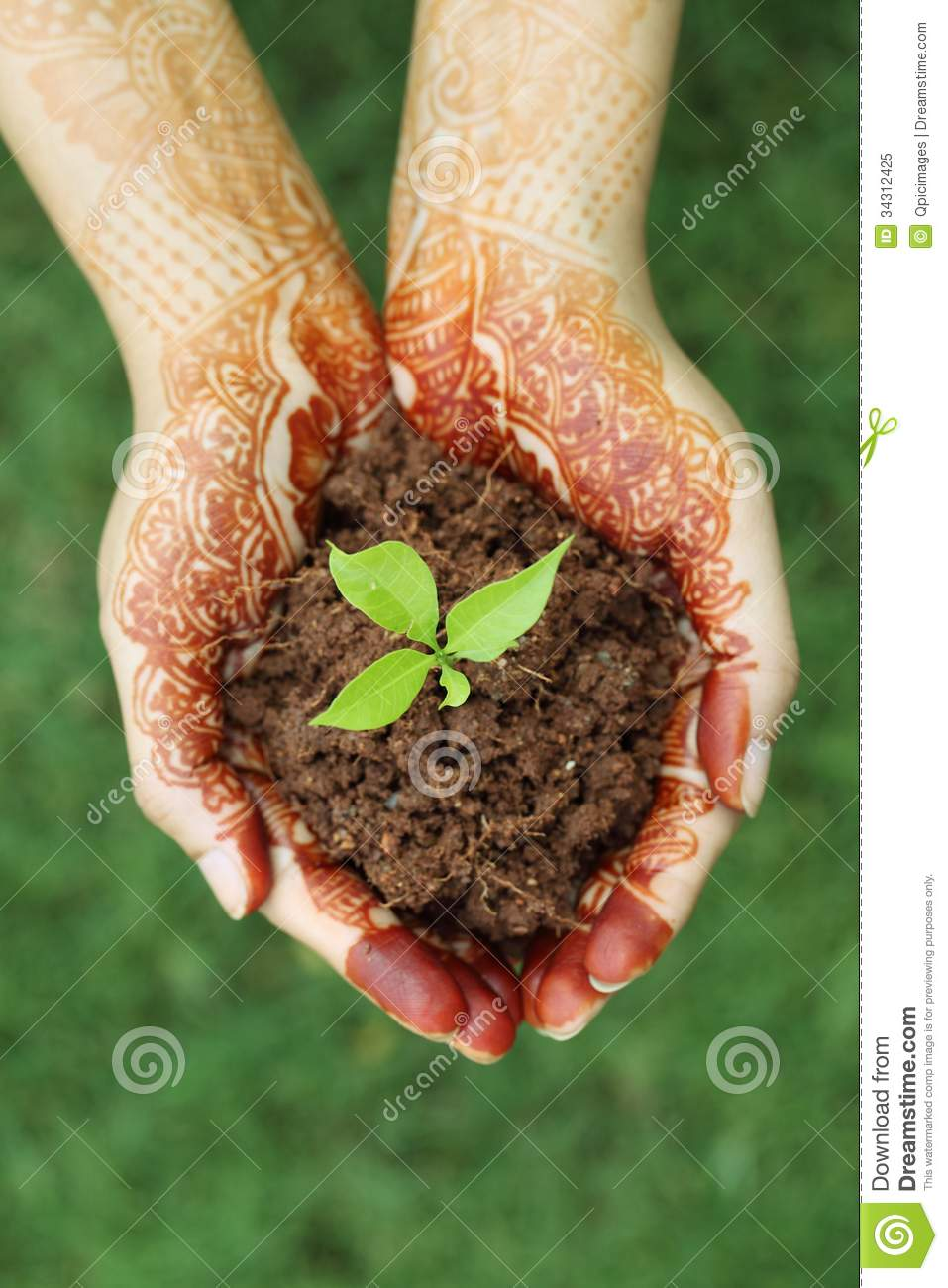 Hands Holding Small Plant New Life Stock Image Image Of Leaf