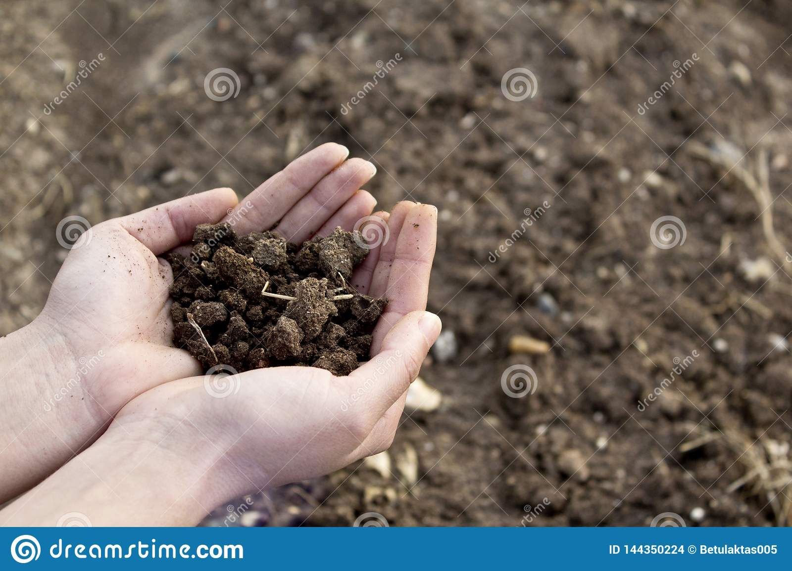 Hands holding soil in agricultural field.