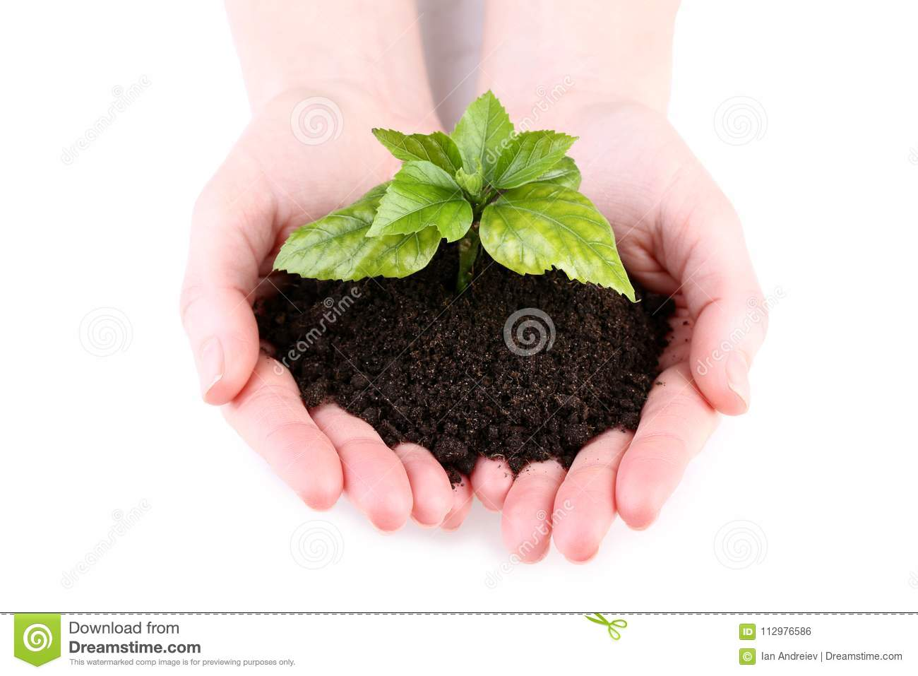 Hands holding young plant