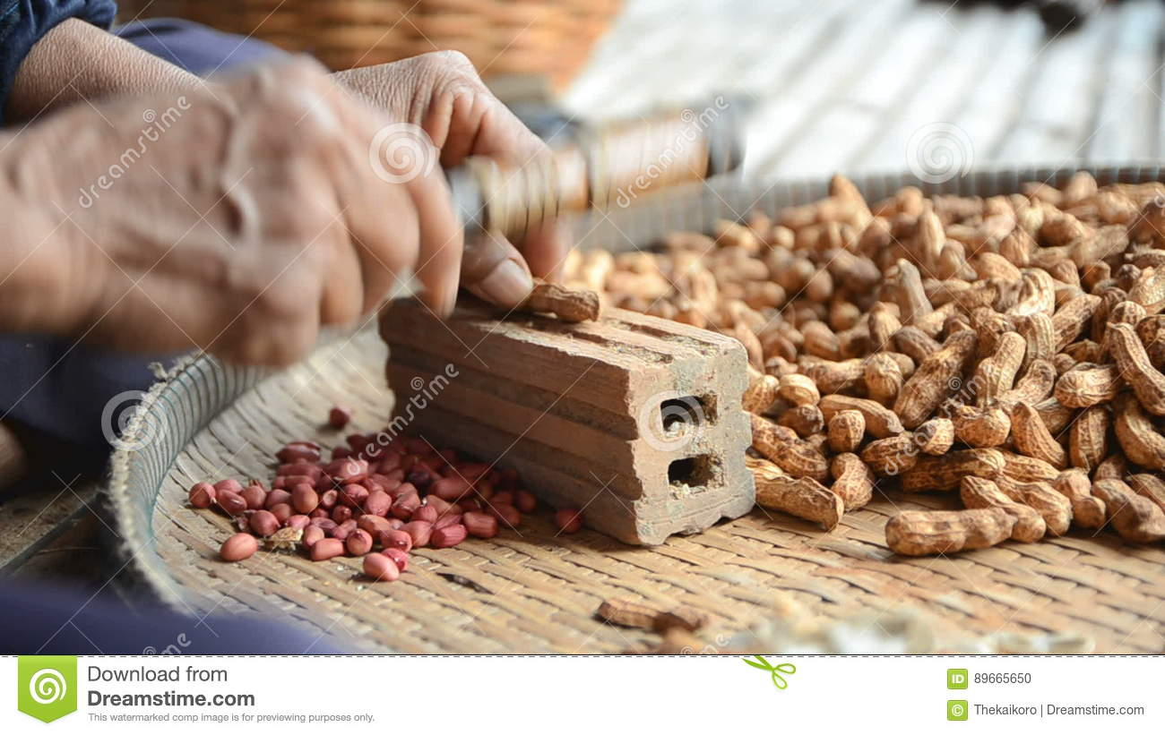 Hands Of Old Woman To Crack Pea Nut Shell With Ambient Sound
