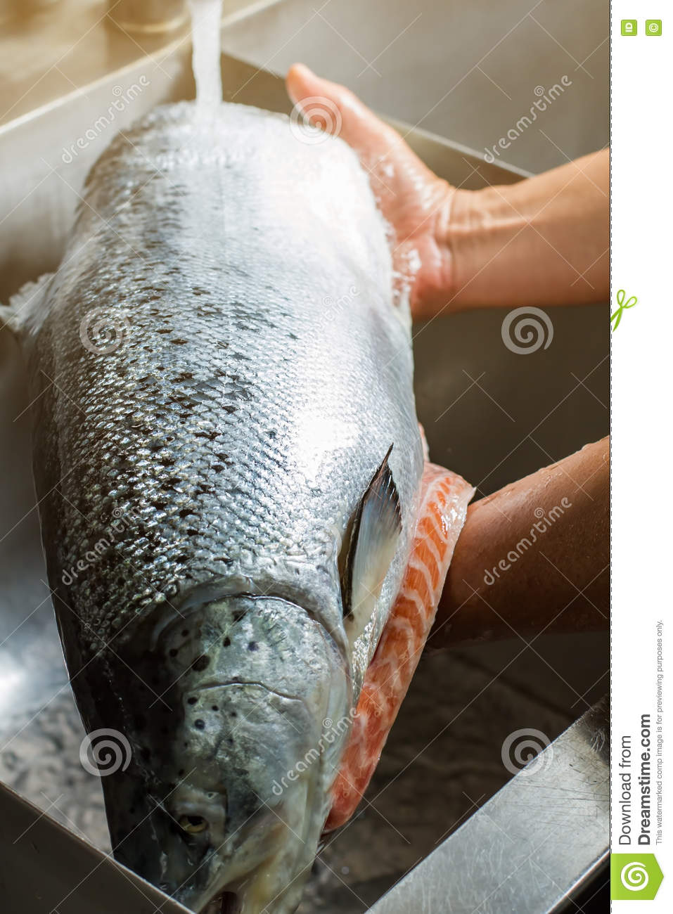 Hands washing fish in sink royalty free stock photography for Big fish seafood bistro