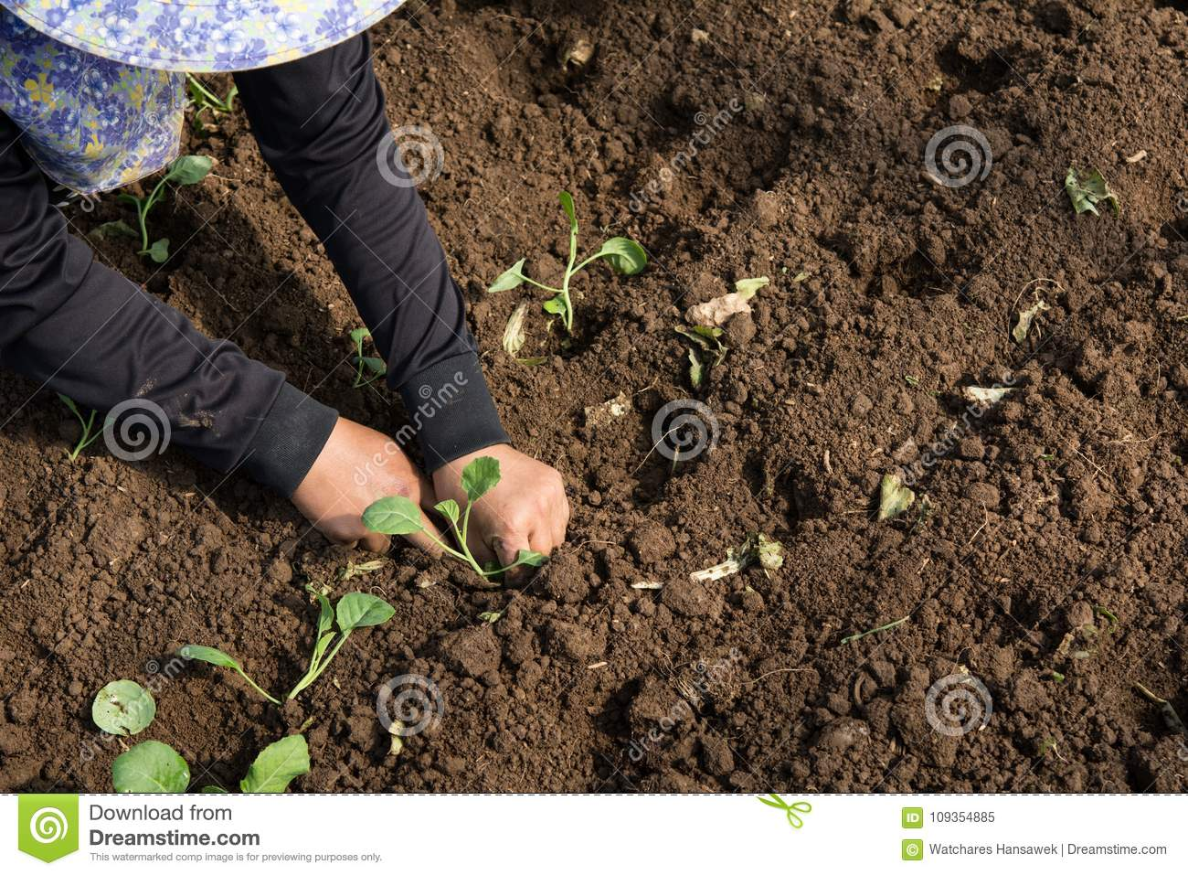 Hands Of A Woman Planting Vegetable In Garden, Movement Of Hand ...