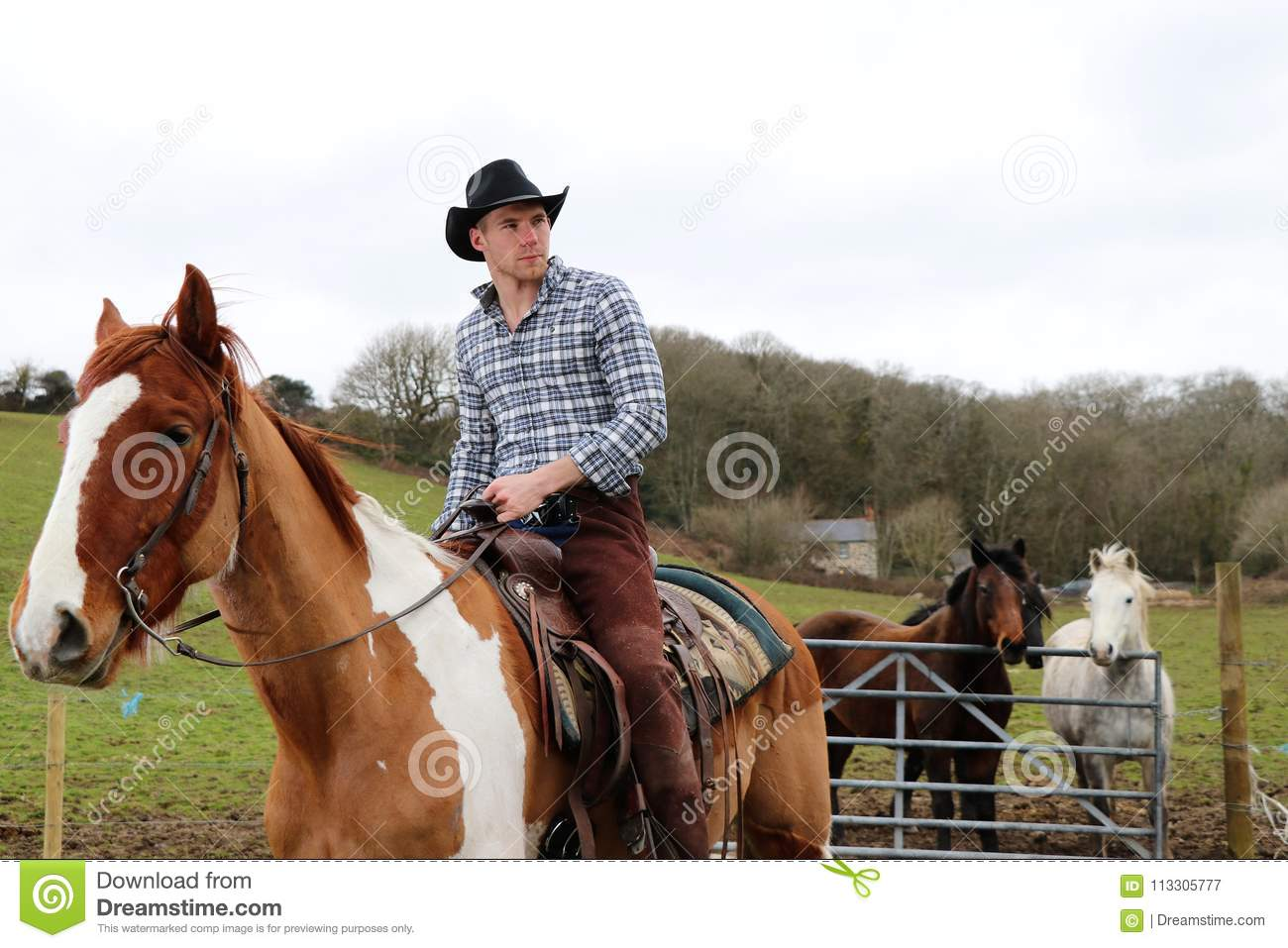 Handsome Cowboy On Horse With Horses In The Background Stock Image