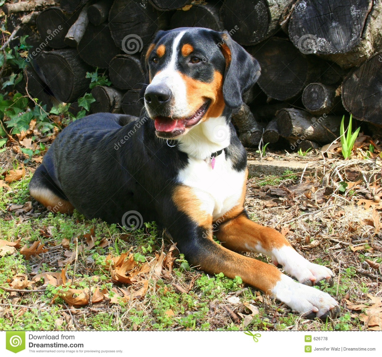Handsome Dog by Woodpile