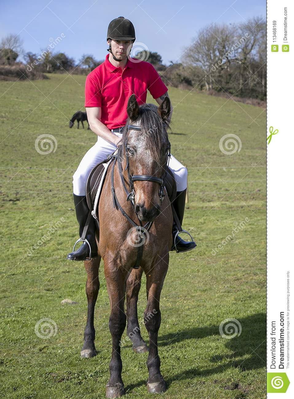 Handsome Male Horse Rider On Horseback With White Breeches Black Boots And Red Polo Shirt In Green Field With Horses In Distance Stock Image Image Of Hilltop Horseback 113468169