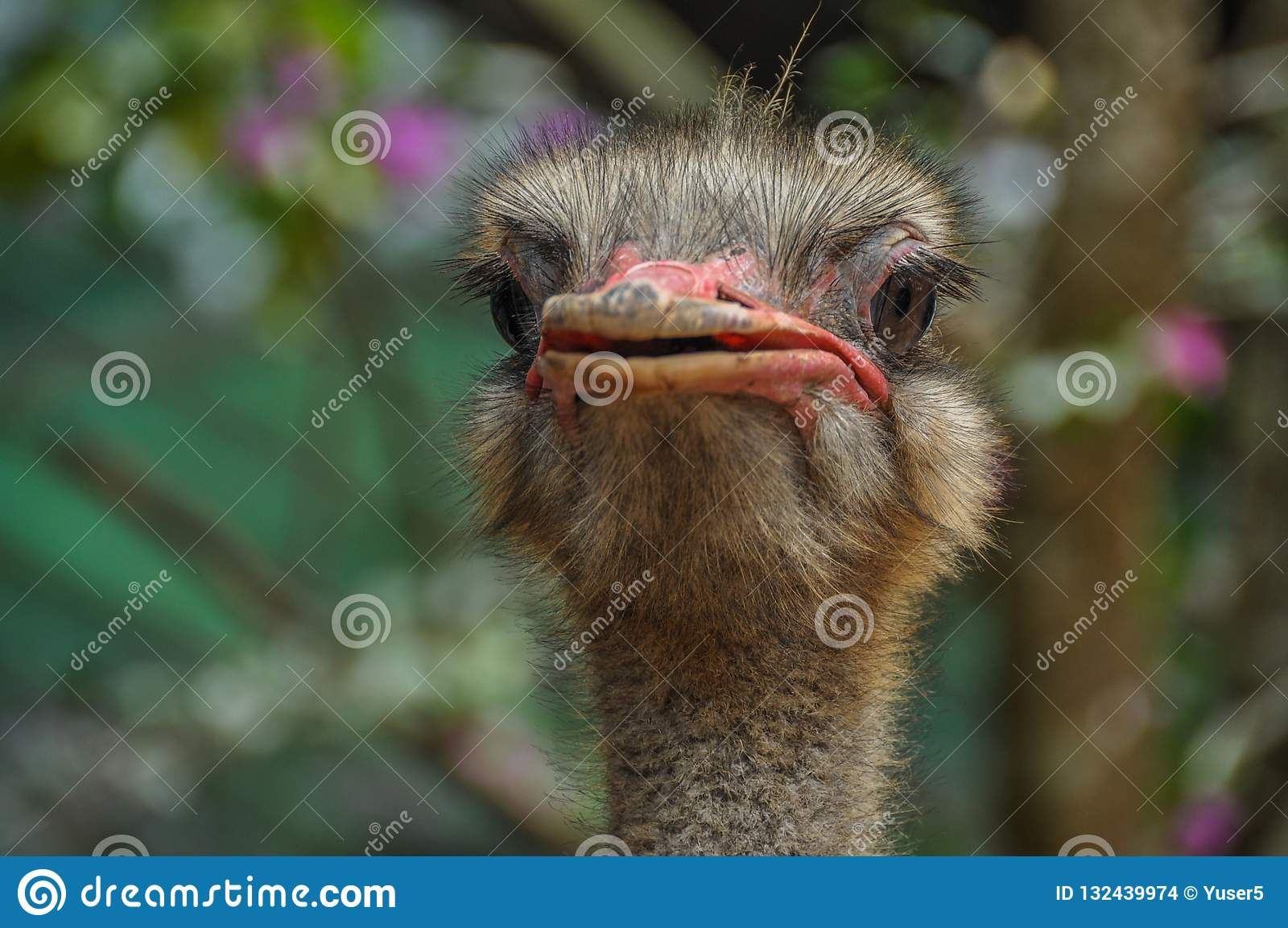 A handsome ostrich is ready to ride anyone