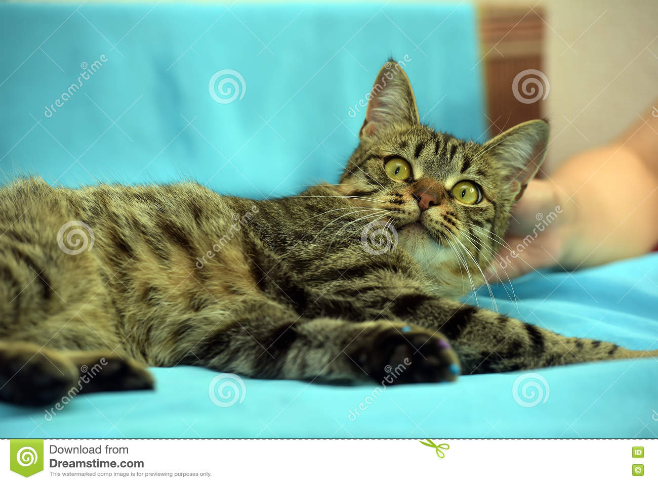 Handsome young tabby cat