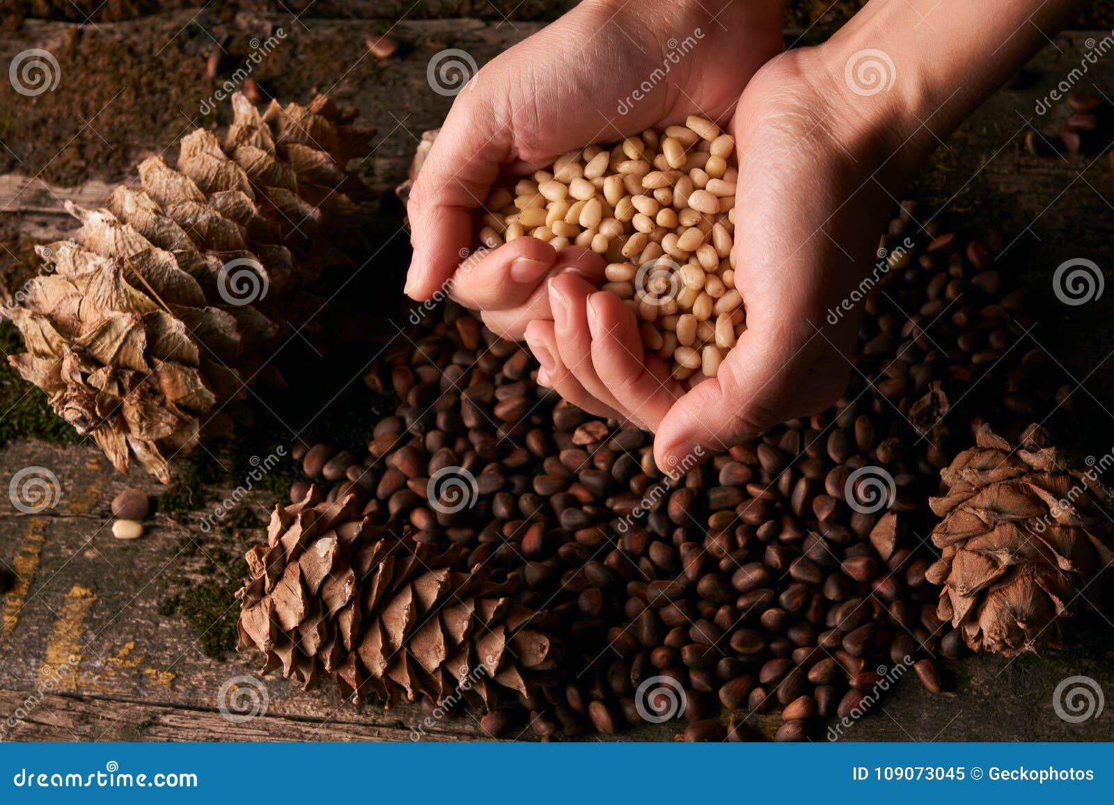 Handvol de pitten van pijnboomnoten en cederdenneappels