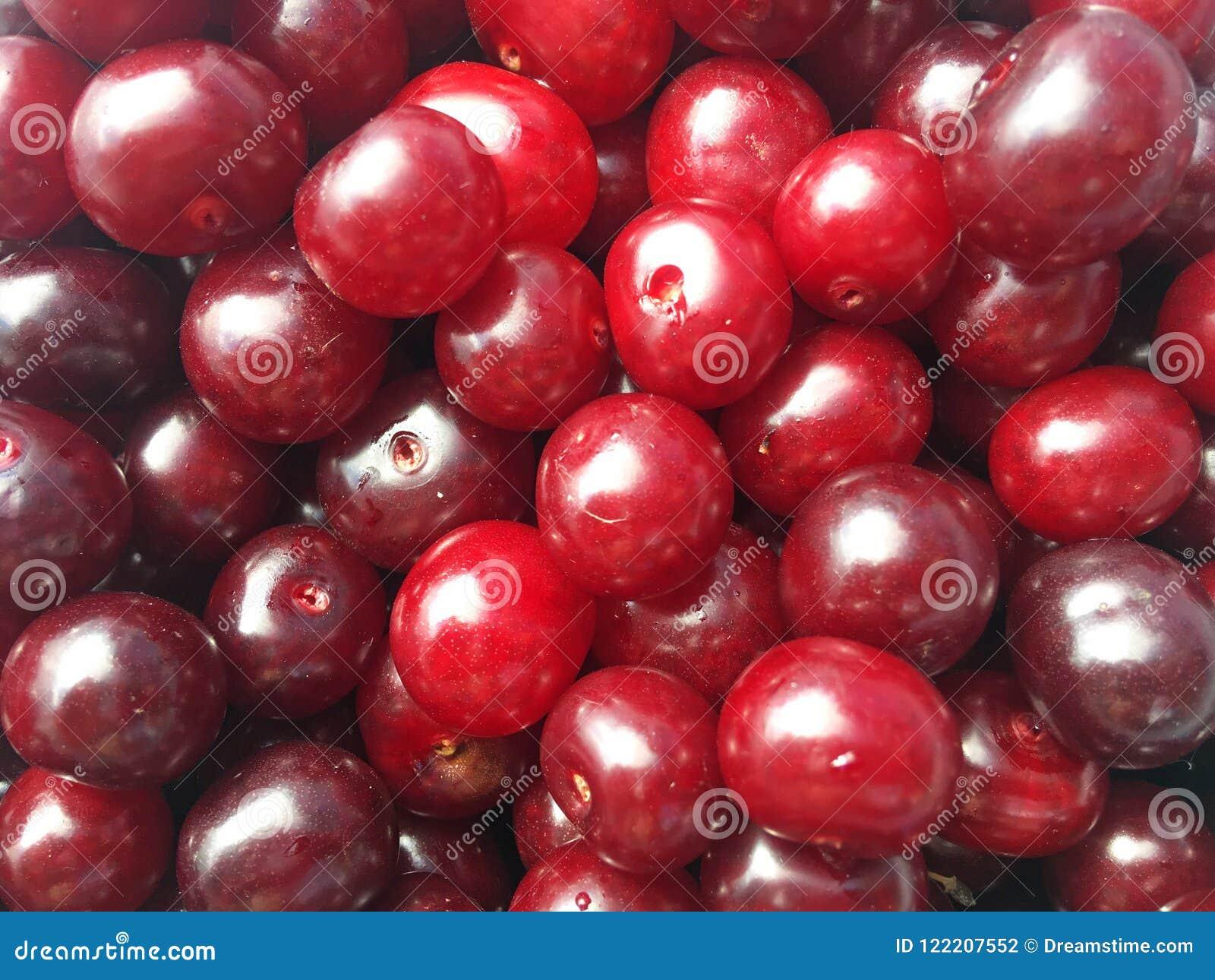 Handvoll rot-reife Kirschbeeren