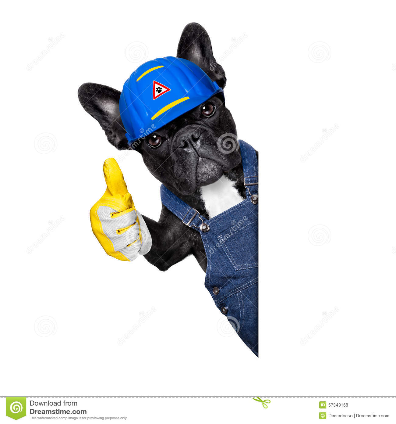 Handyman Dog Stock Photo. Image Of Construction, Housing